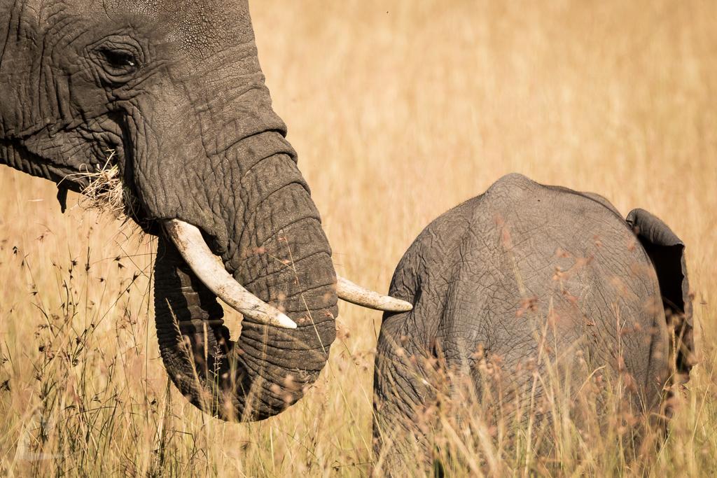 20150805_Masai_Mara_1967-1.jpg