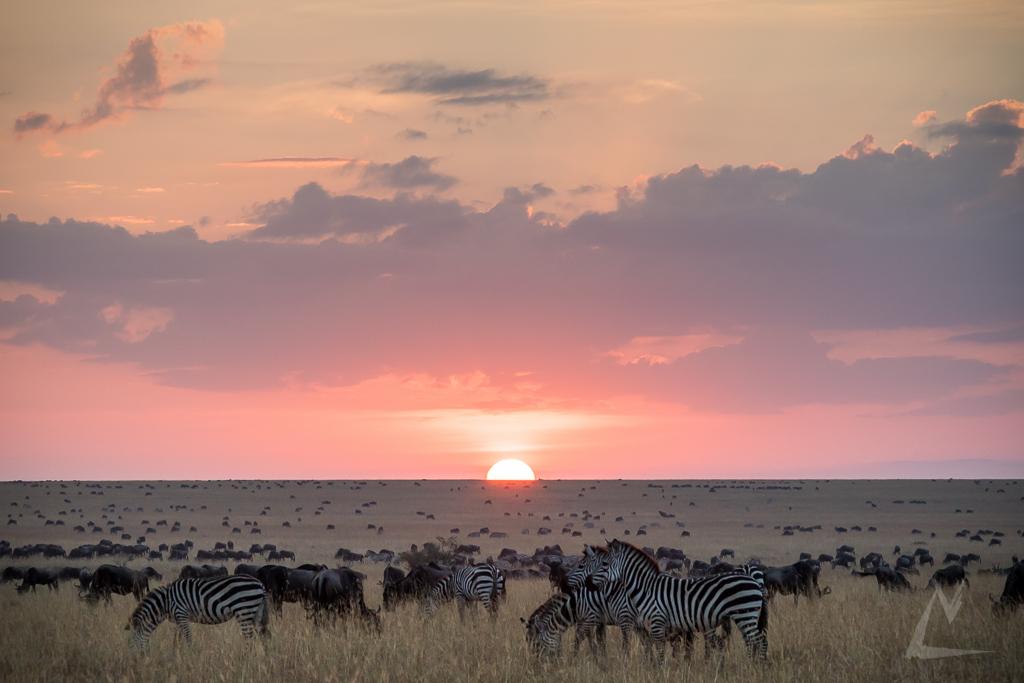 20150805_Masai_Mara_1837-1.jpg