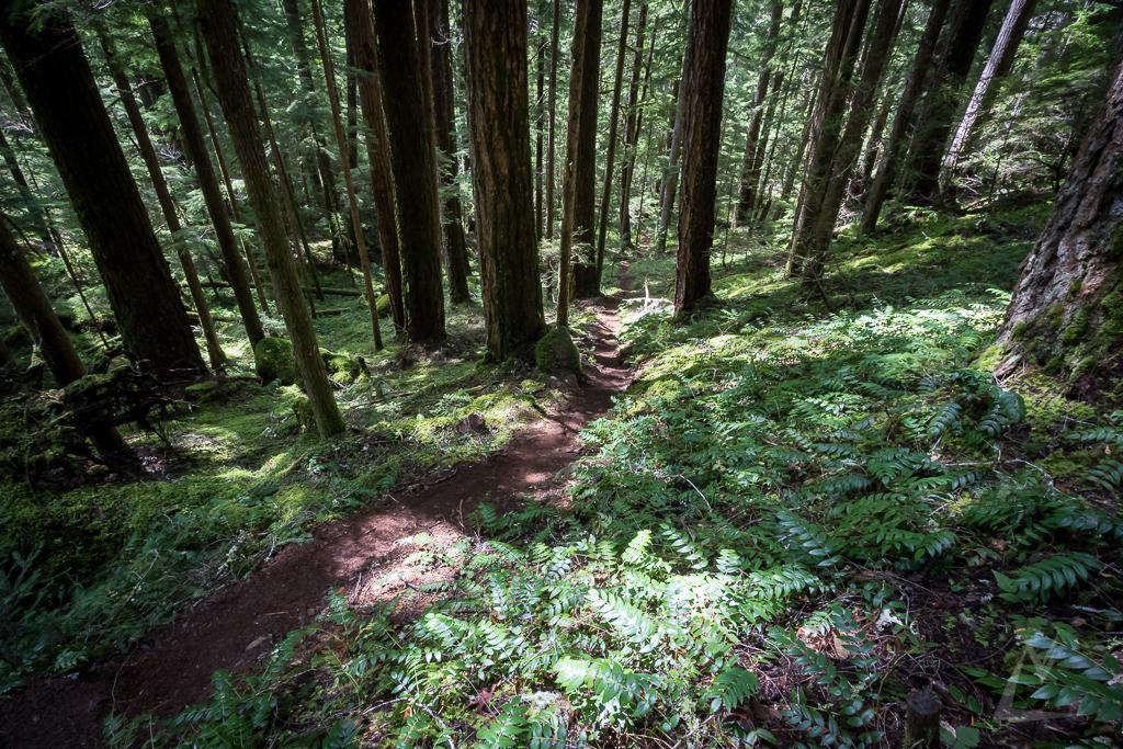 20150409_Oregon_April15_154-1.jpg