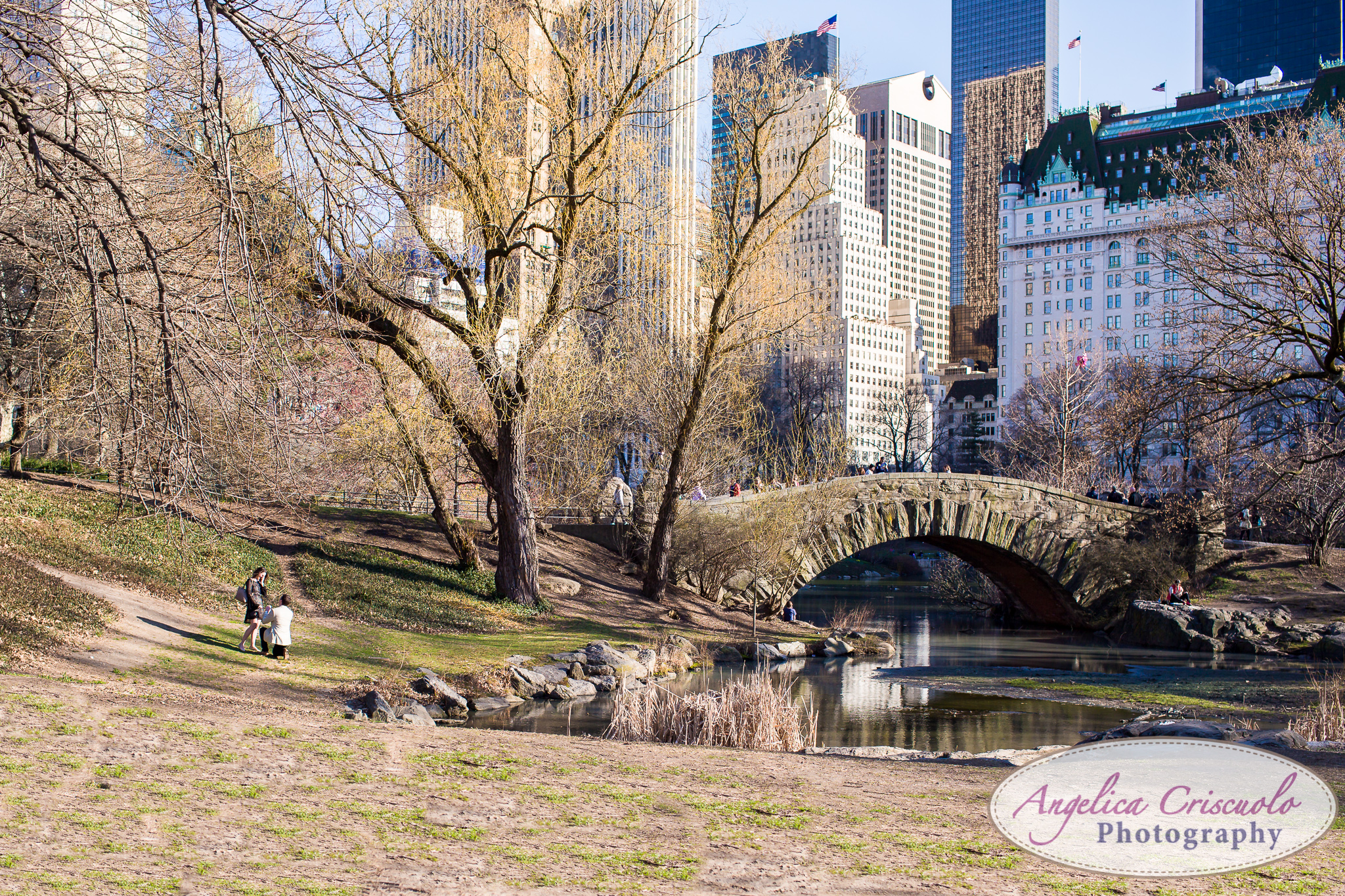 NYC Wedding Proposal in Central Park Ideas