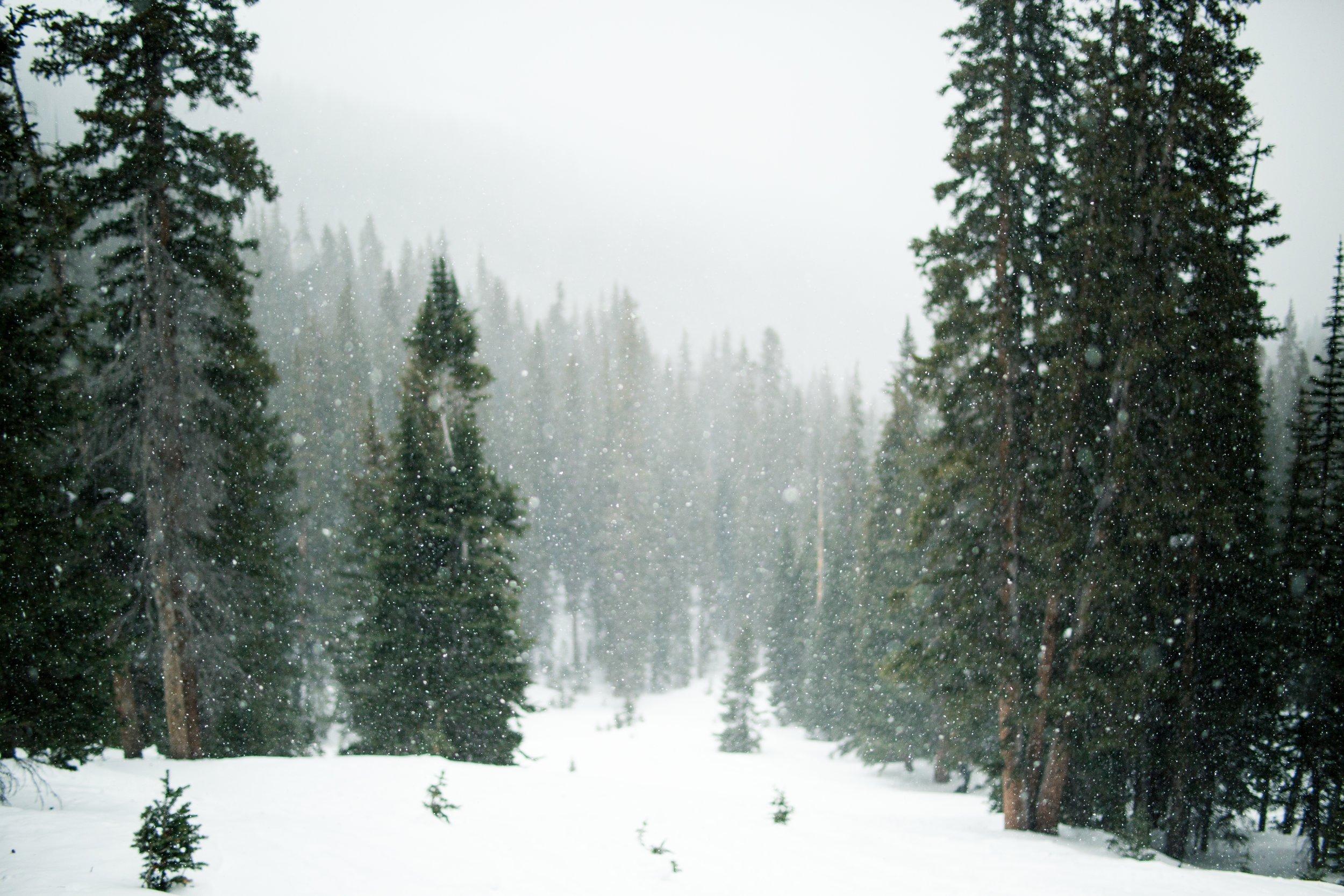 snow-1246175.jpg
