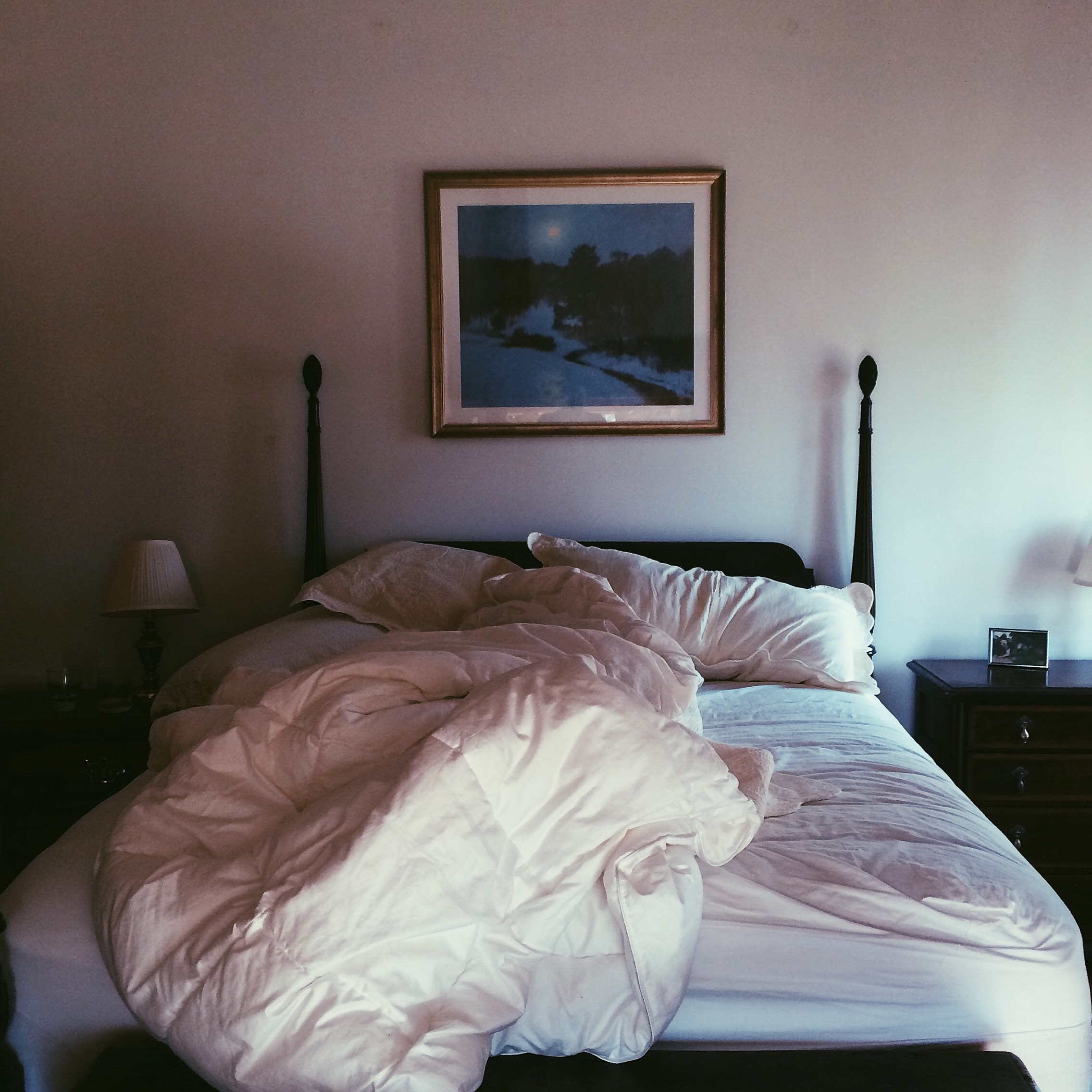 Kiki's bed. Litchfield, CT. November 2014.