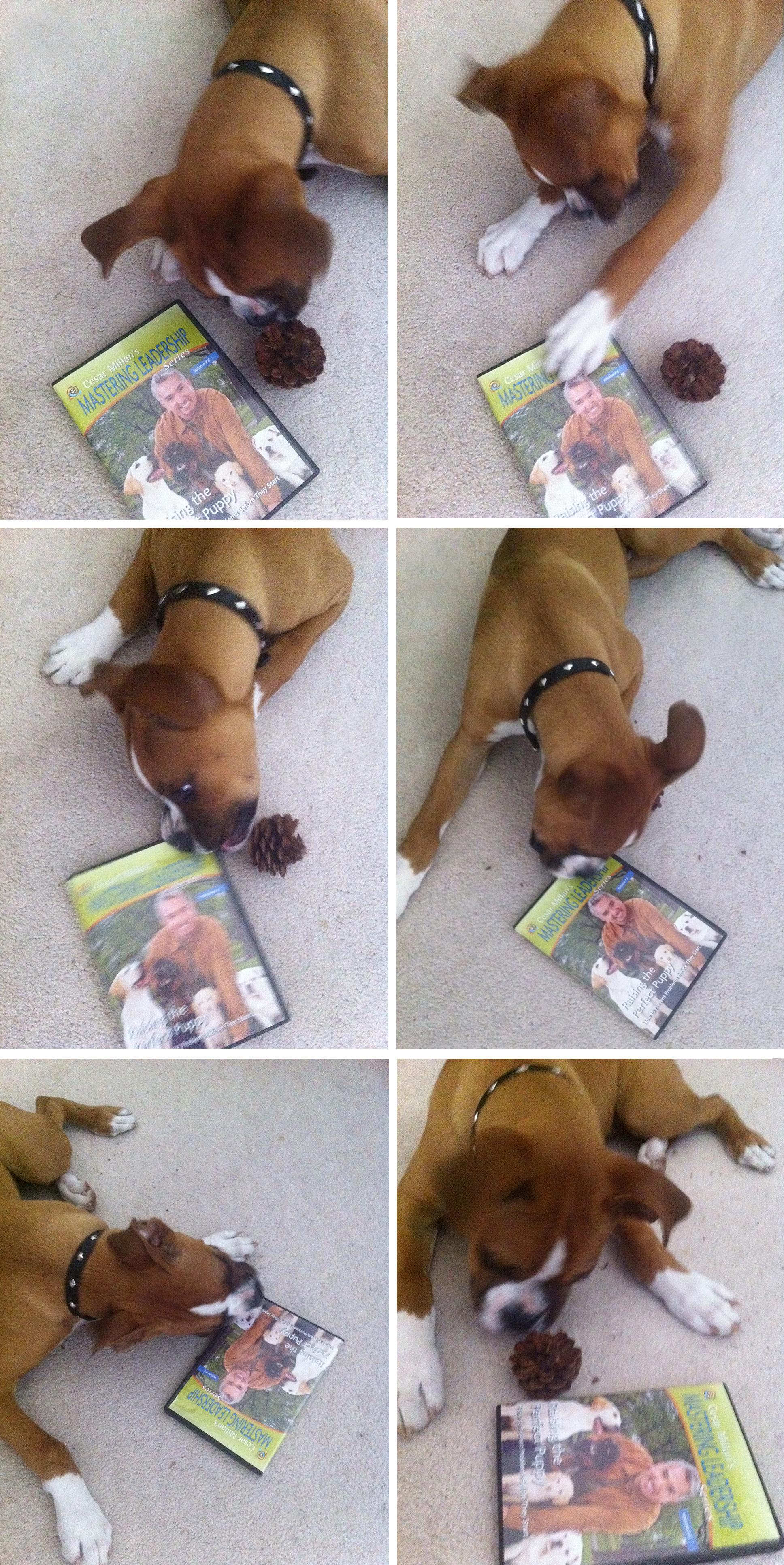 Chew_DVD.jpg