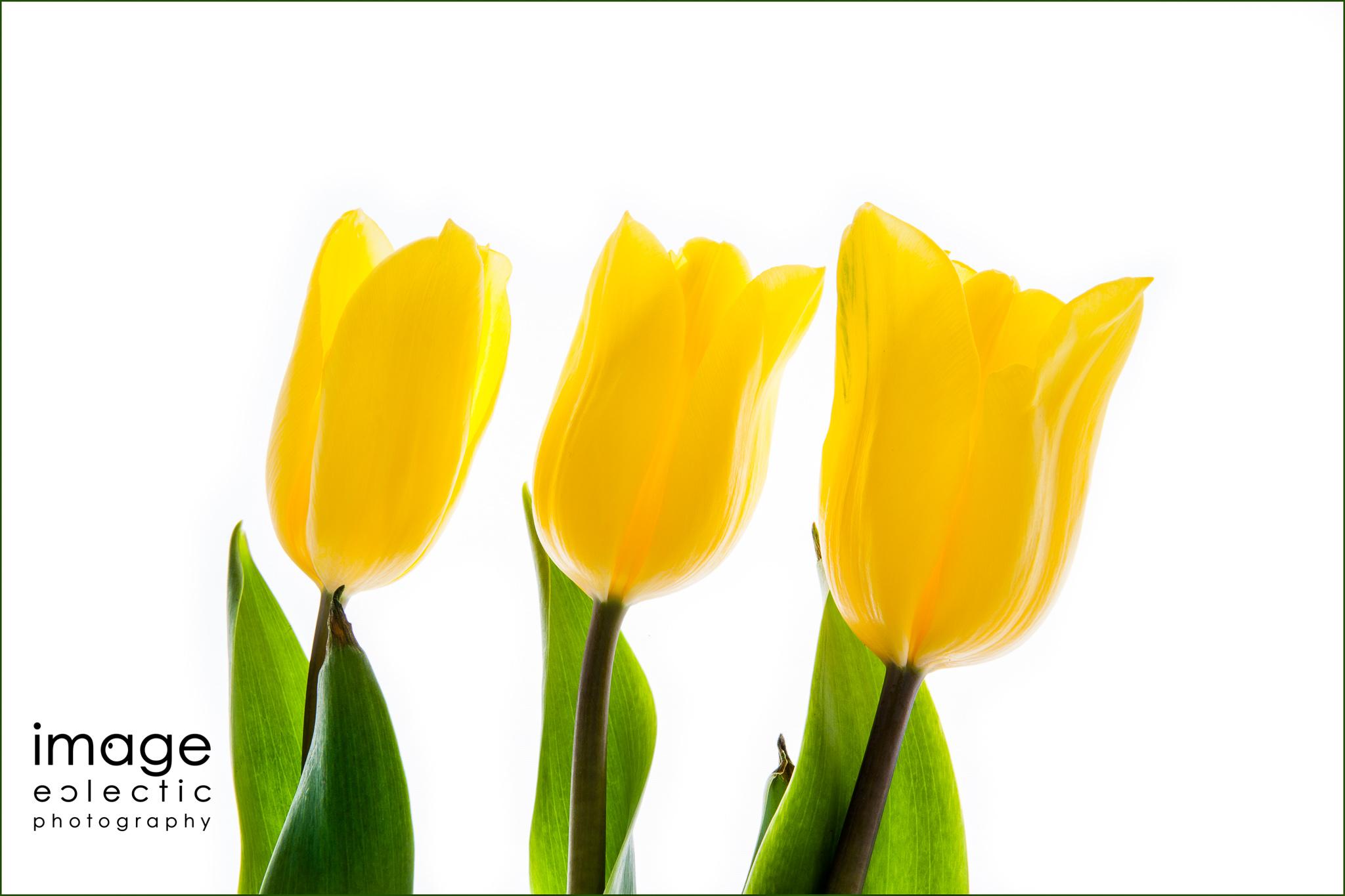 Trilips