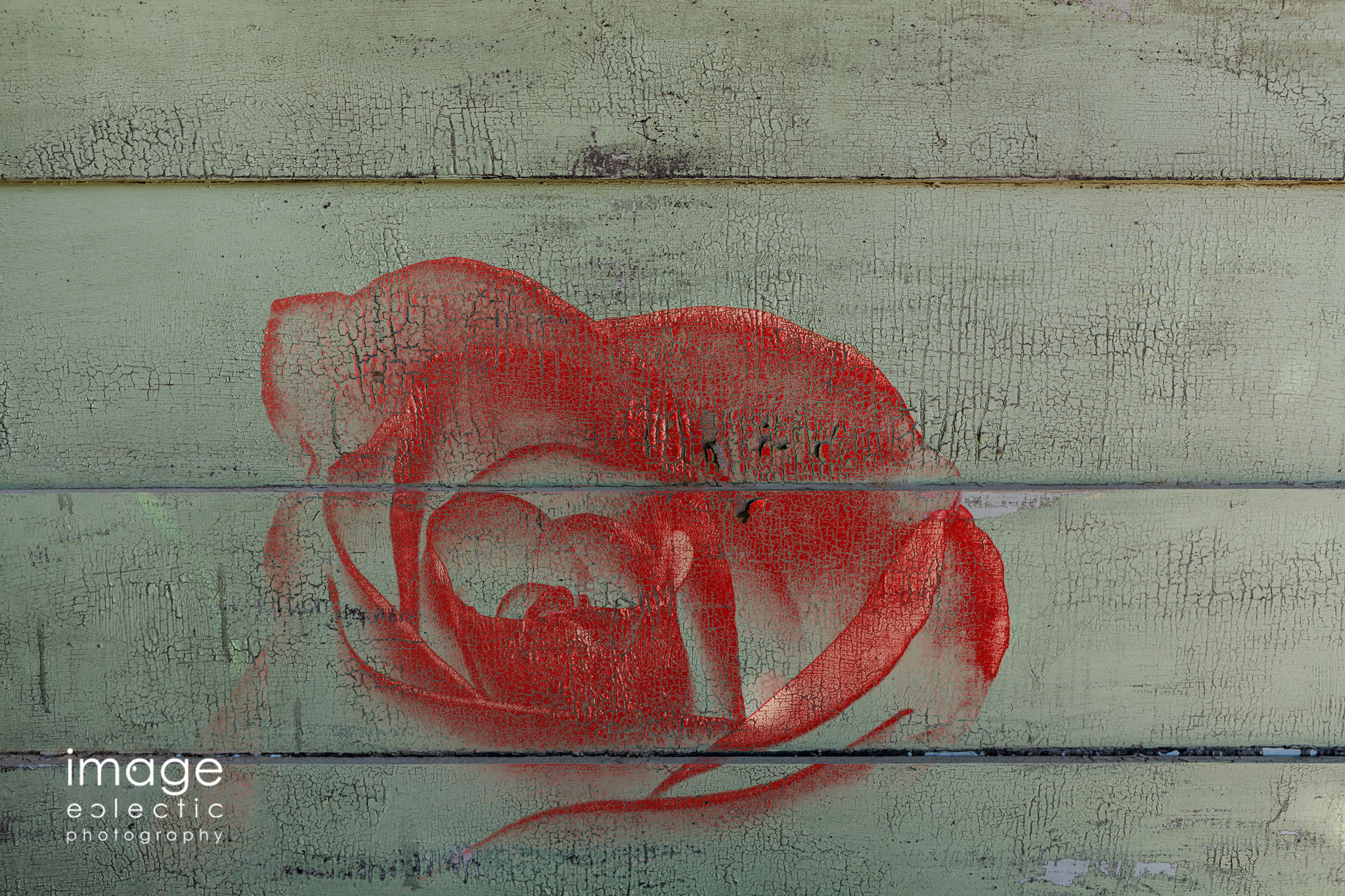 Rose on Wall