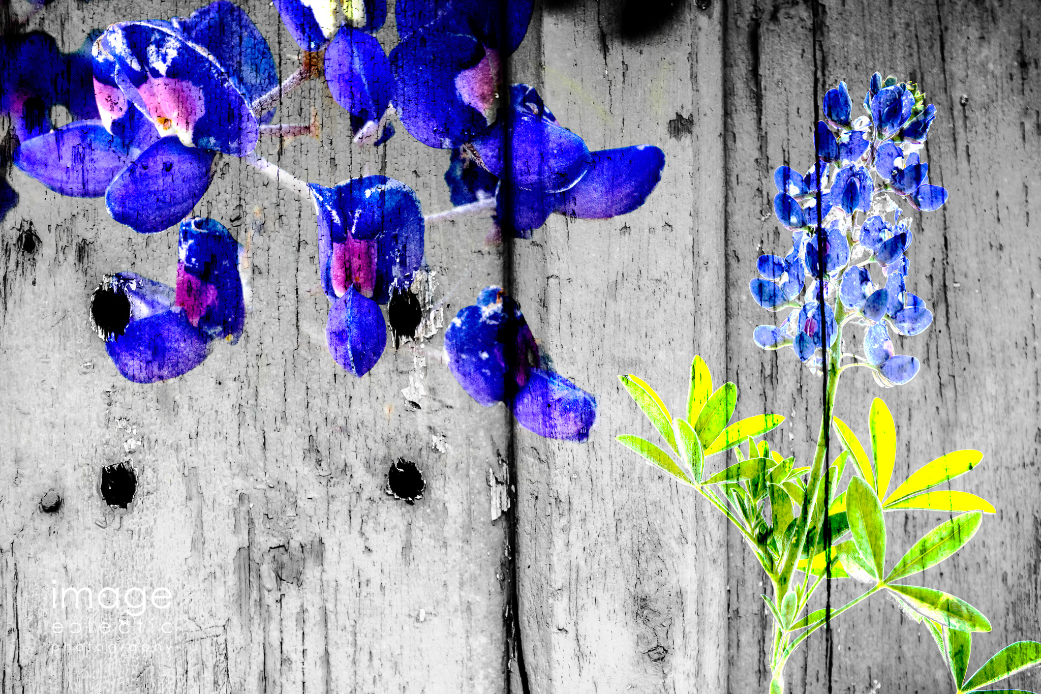 Bluebonnets on the Wall