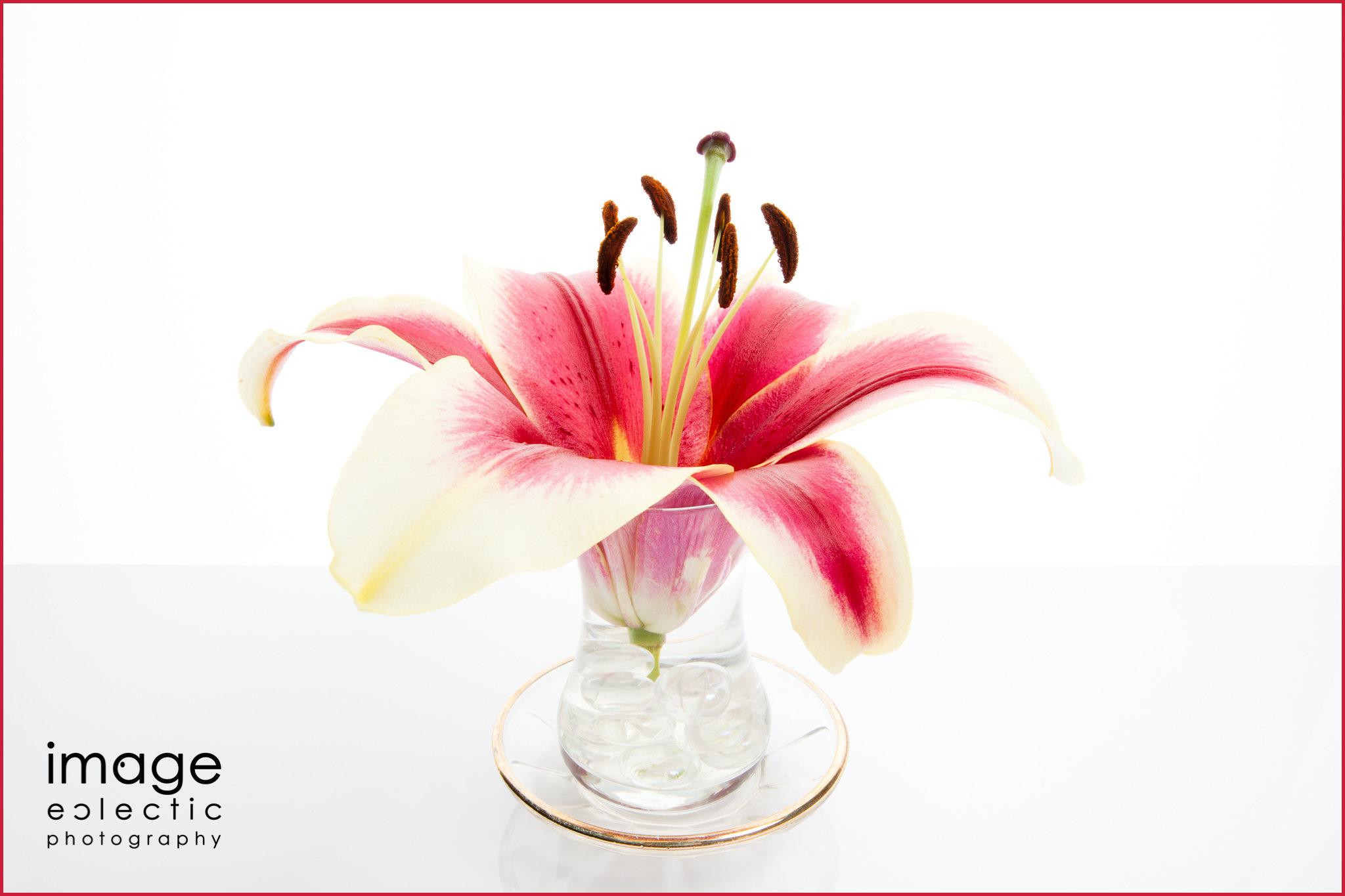 Sonata Lily
