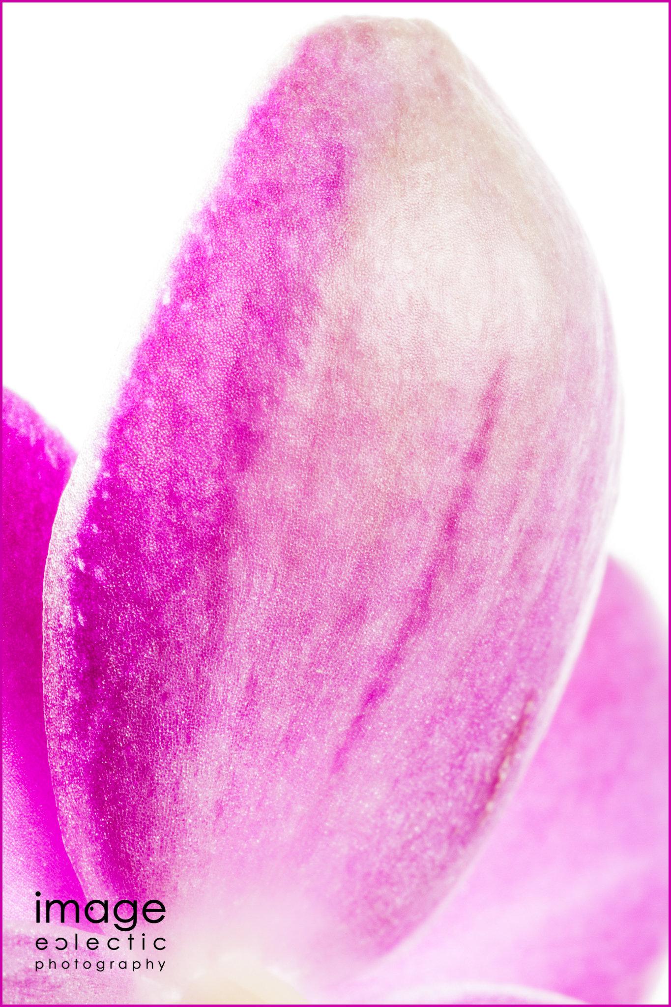 Violet Fin