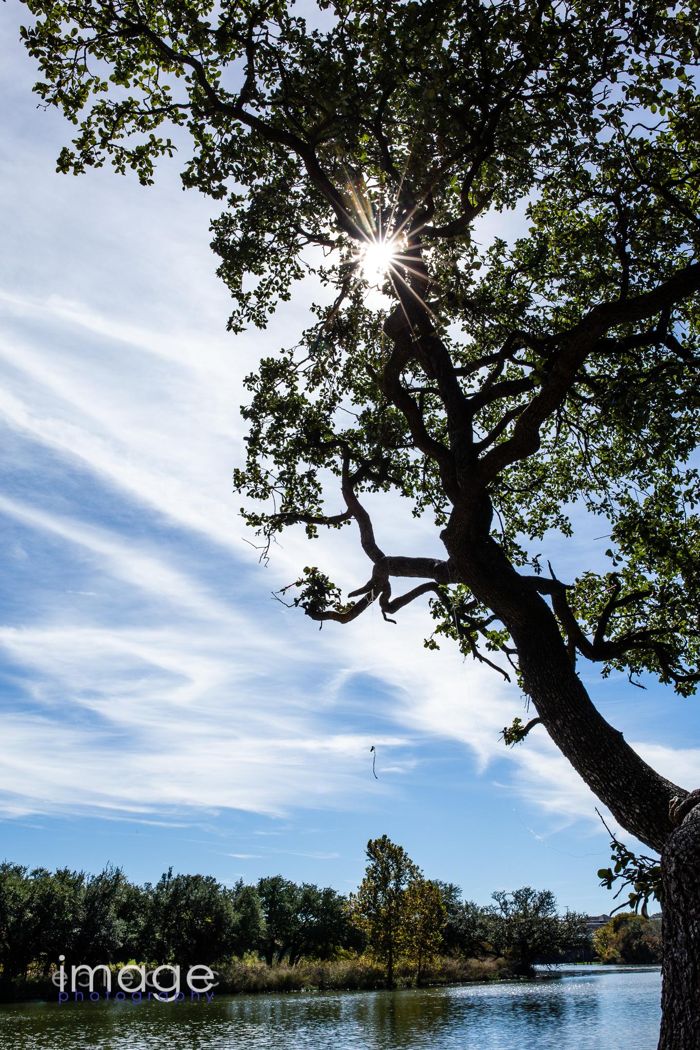 Fishing Tree