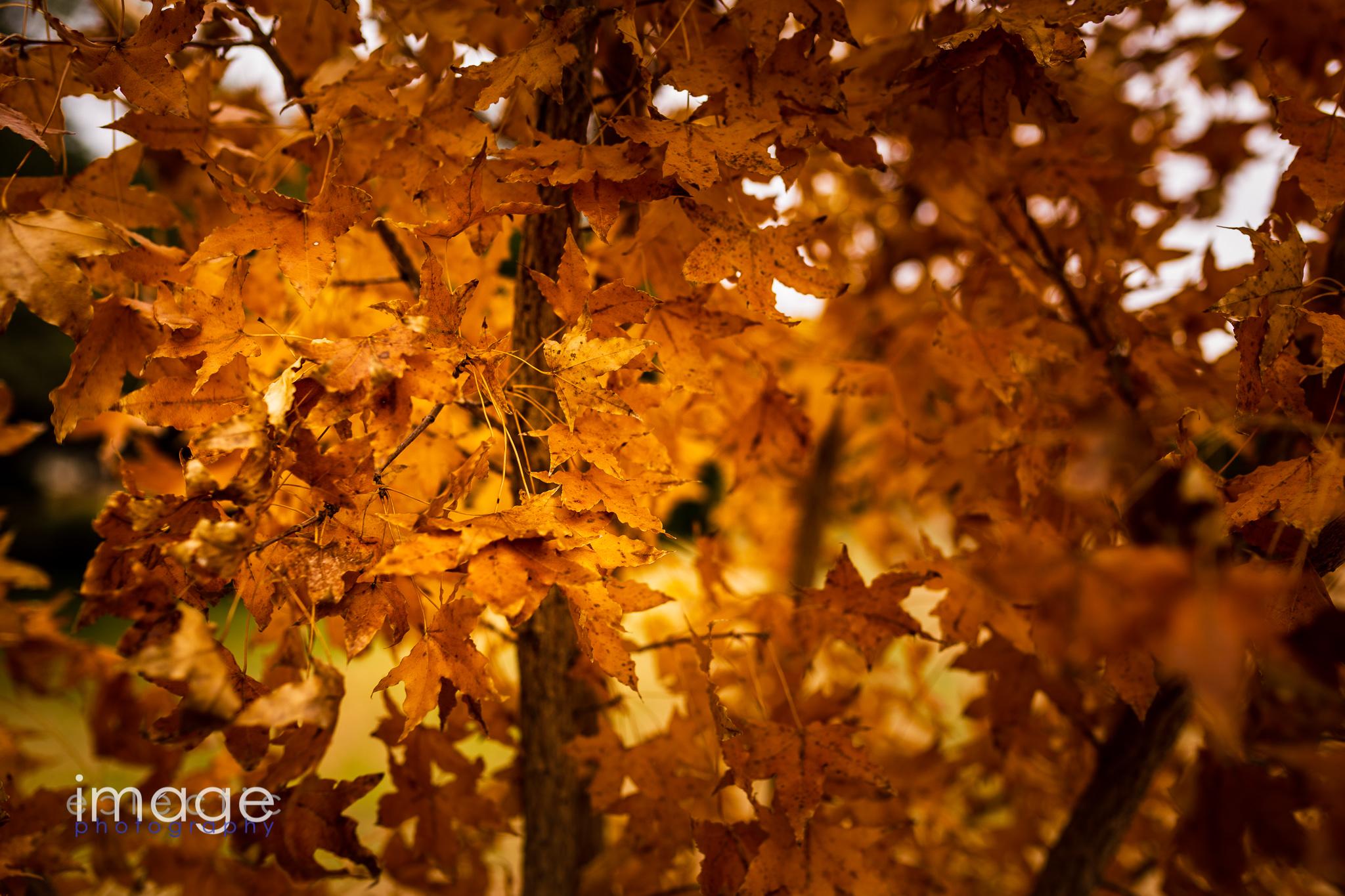 Fall Closeup