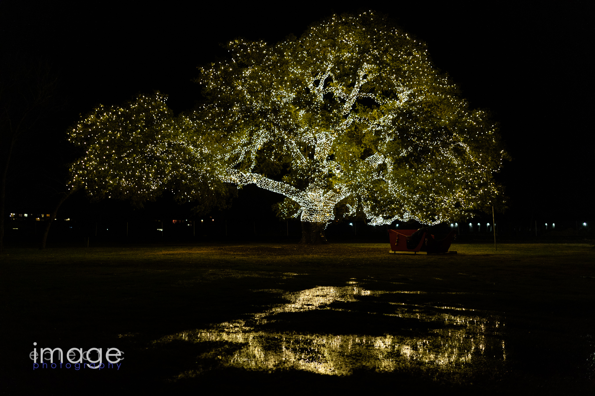 The Cedar Park Tree