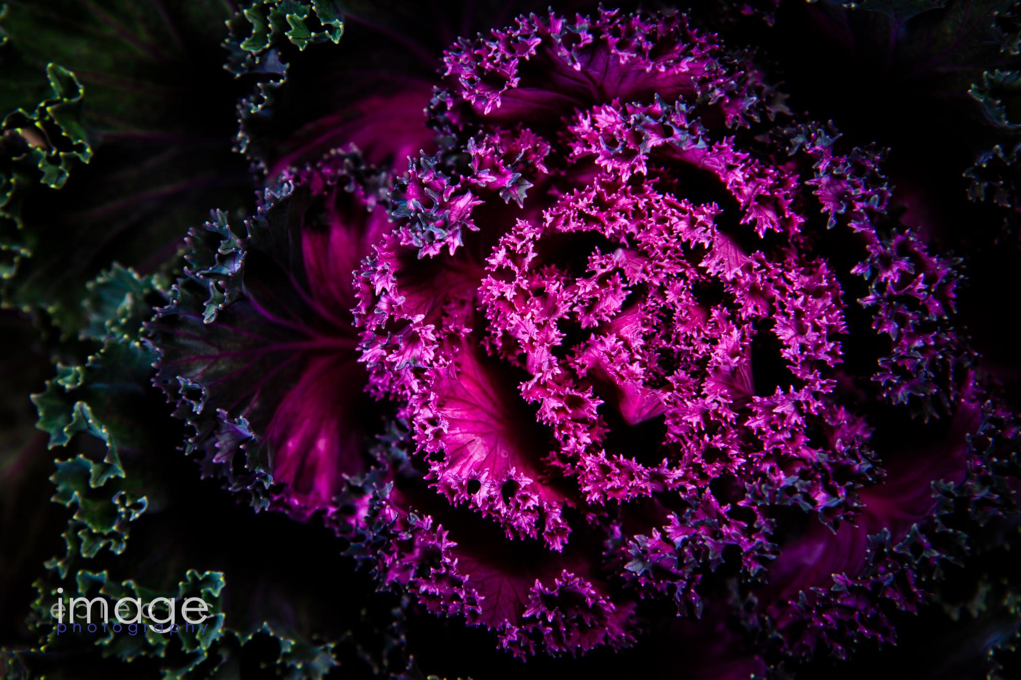 Heart of Purple