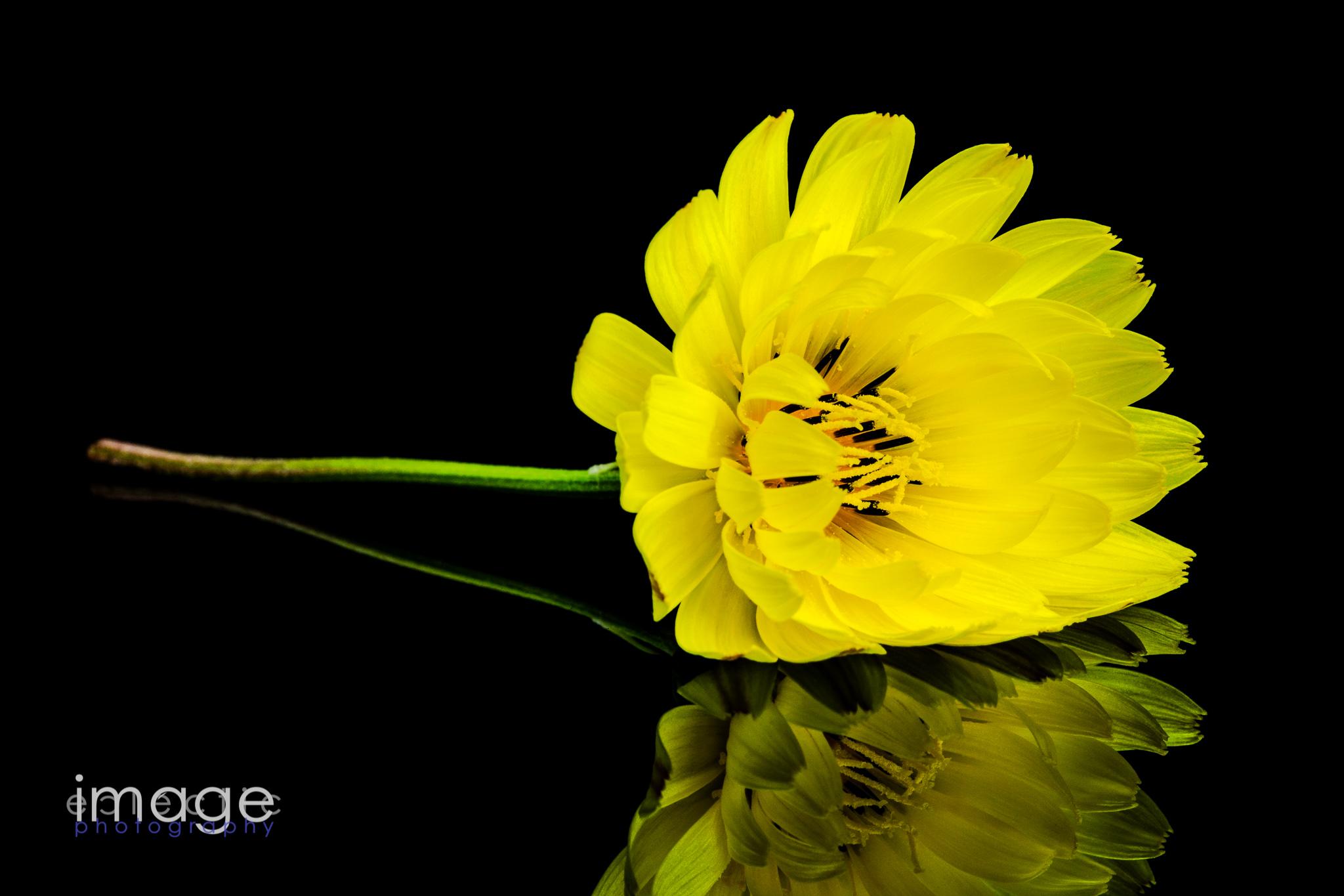 Yellow Dany