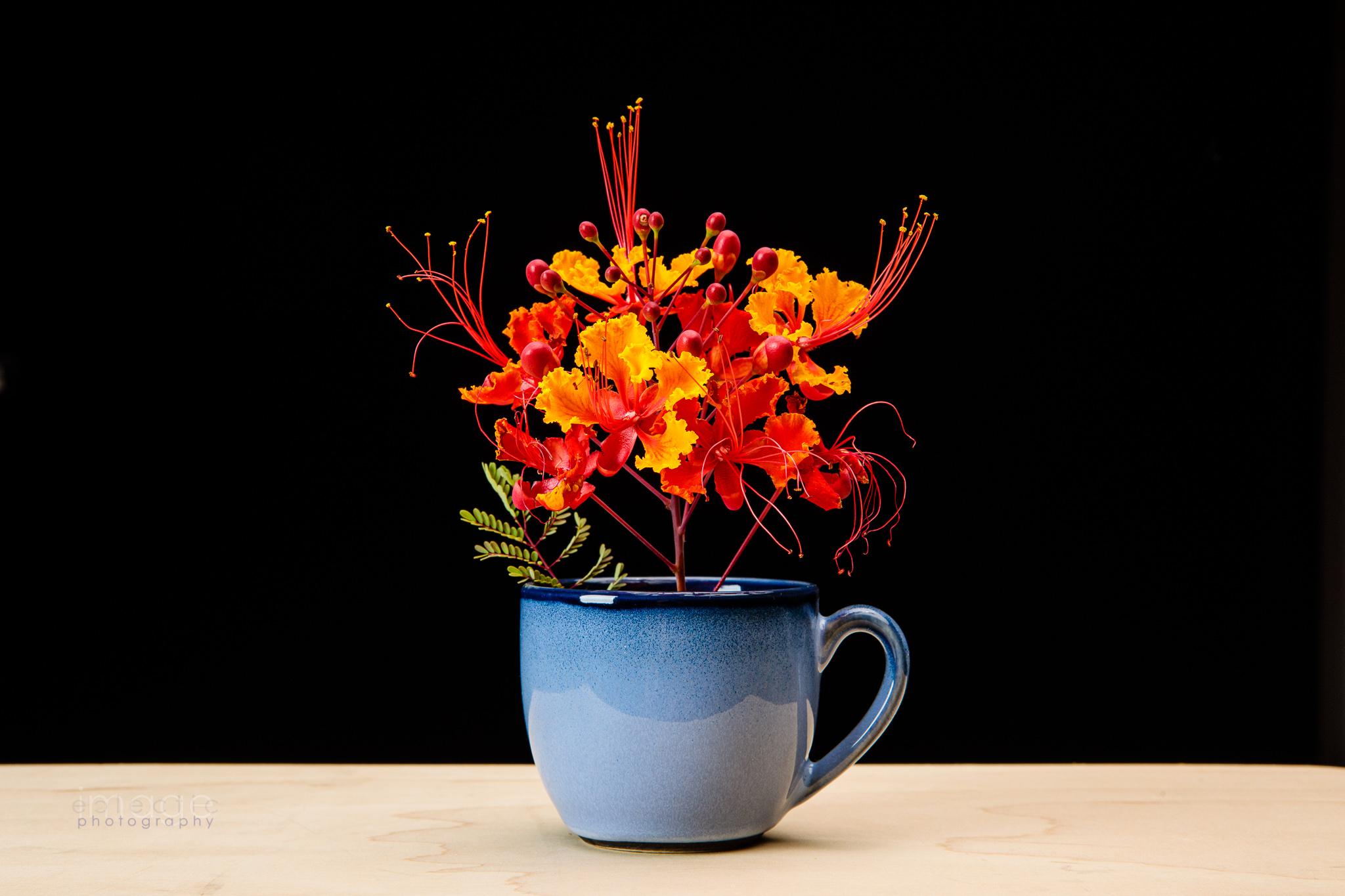 Orange in a Cup