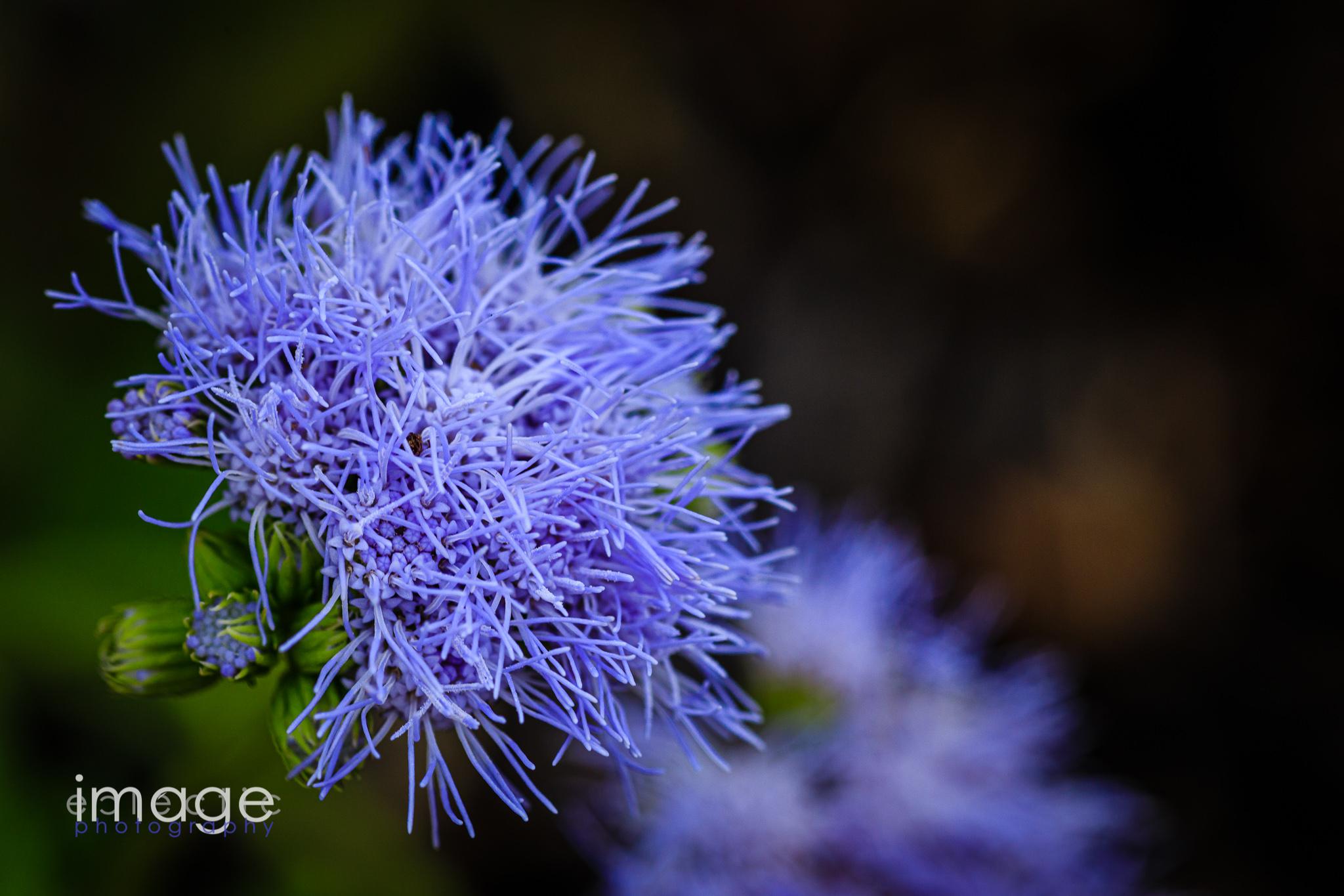 Garden Urchin
