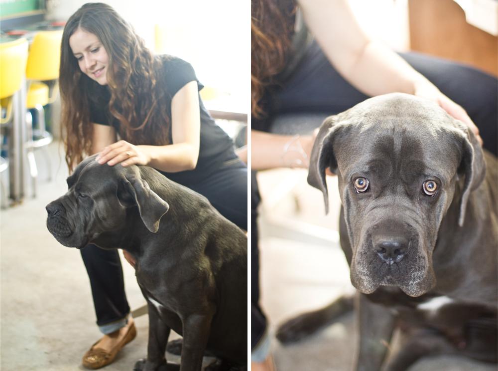 Mary Beth & their handsome Italian Mastiff, Lenny.
