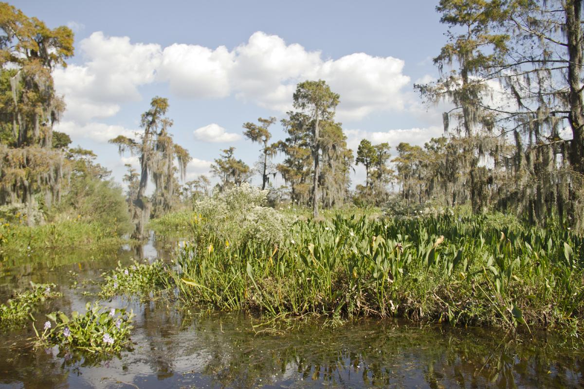 The Louisiana Bayou along Lake Salvador.