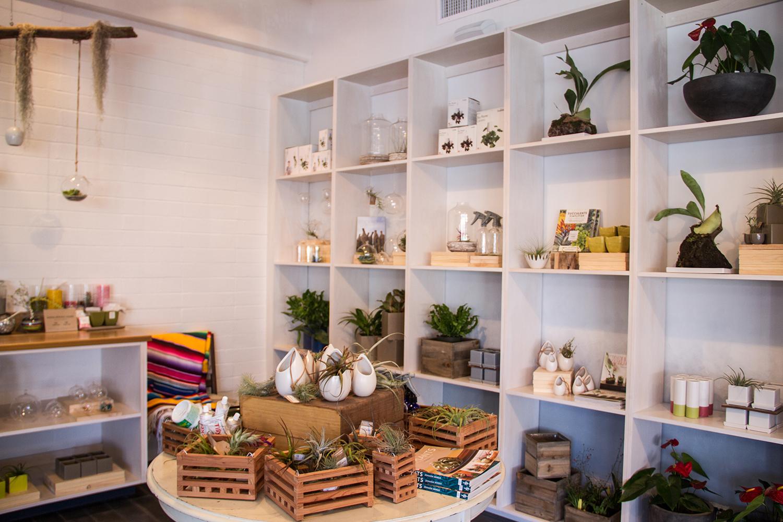 Gorgeous plants andbotanical goods inside Paiko.