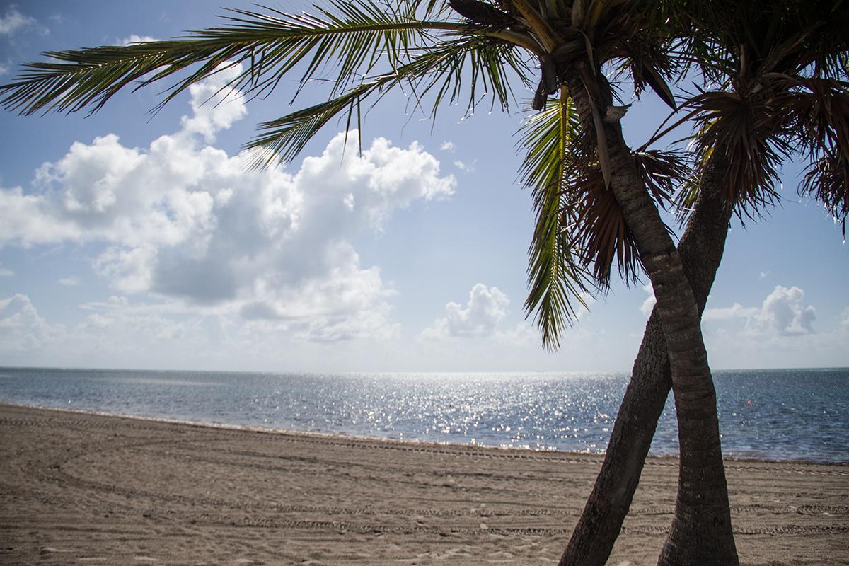 Crandon Park Beach in Key Biscayne