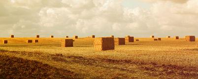 Field of haystacks.
