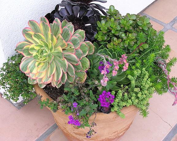 Flower and plant arrangement by Karen Jones