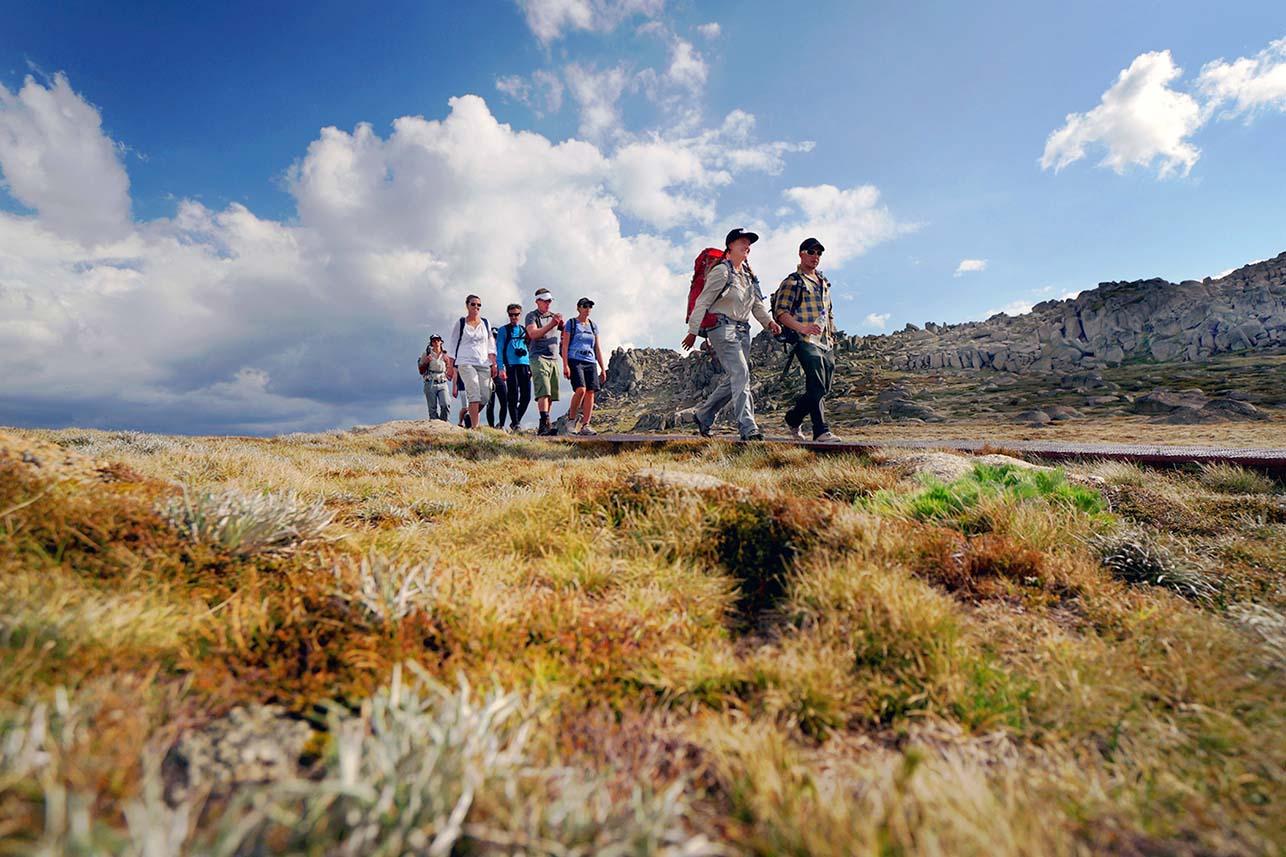 Group_Walks_Over_Grass.jpg