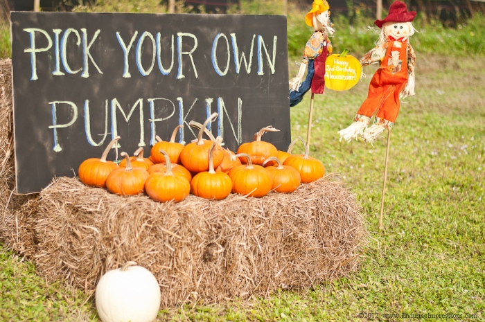 pick your own pumpkin