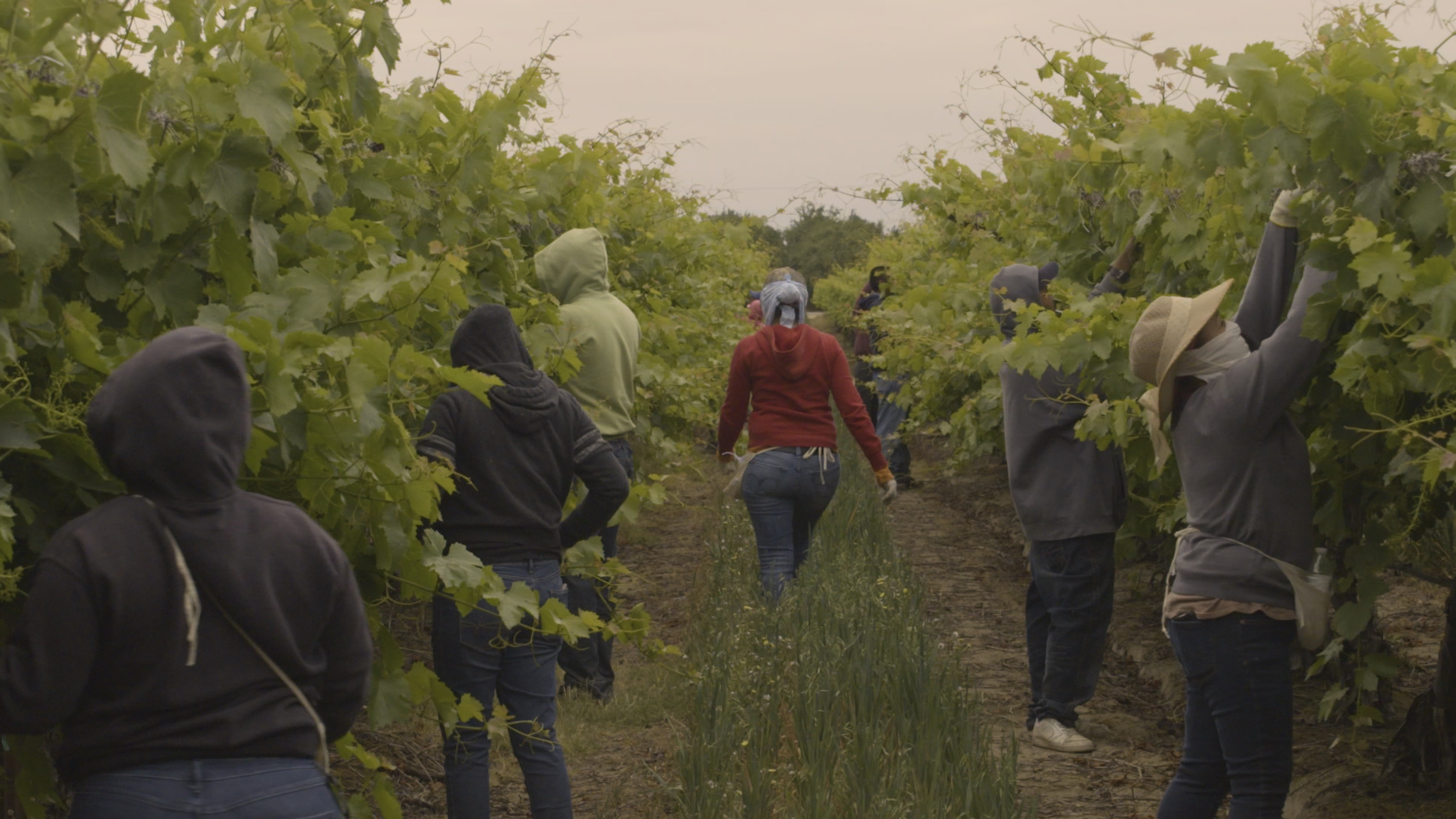 (1) Workers in Grape Field.jpg