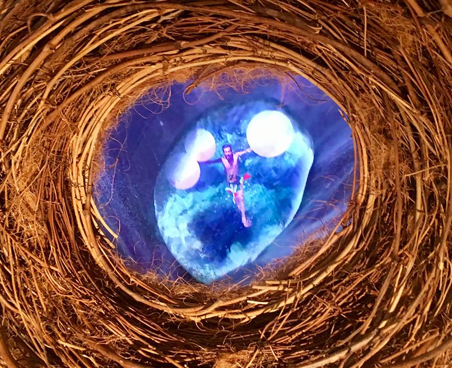 nest_detail.jpg