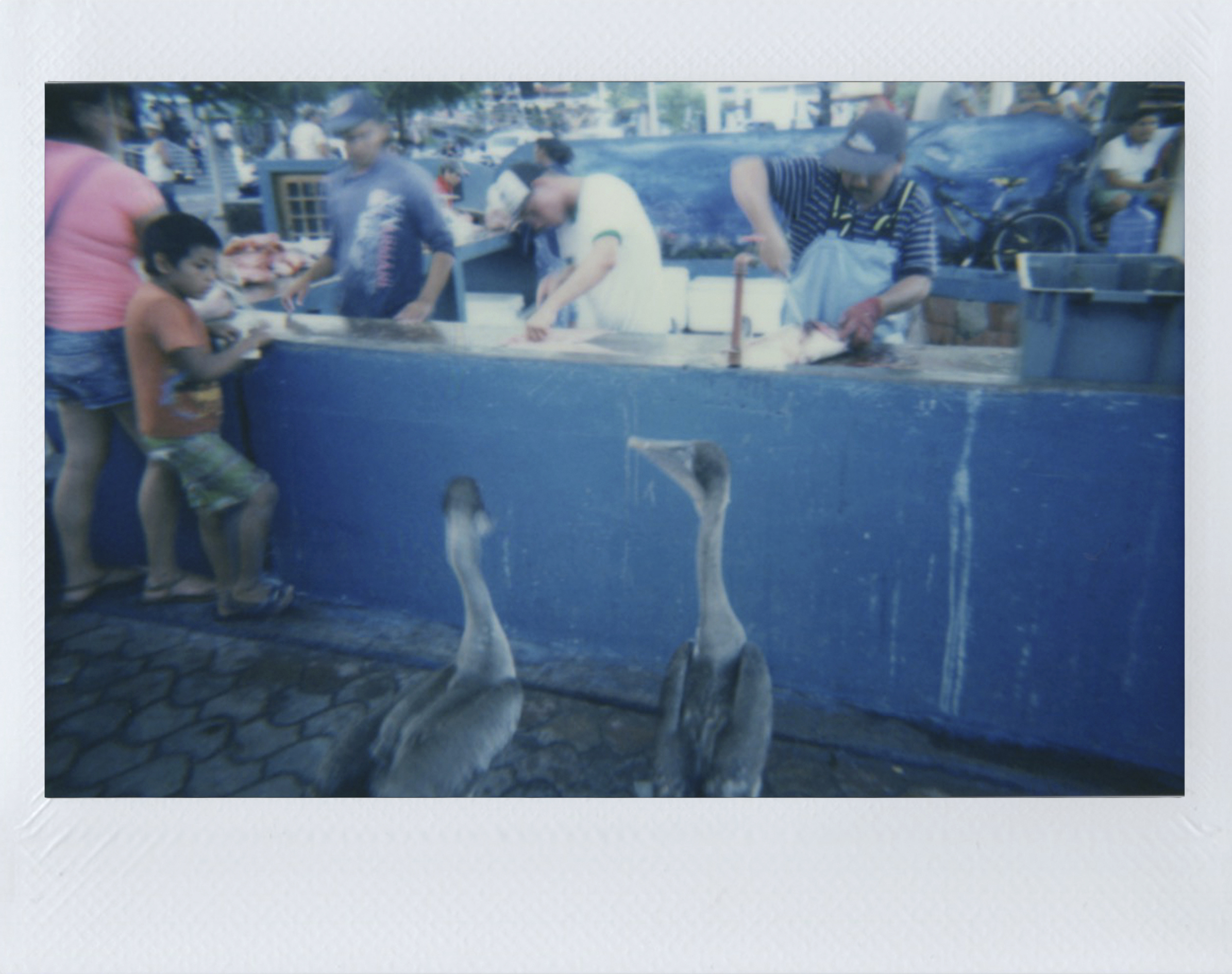Polaroid 13.jpg