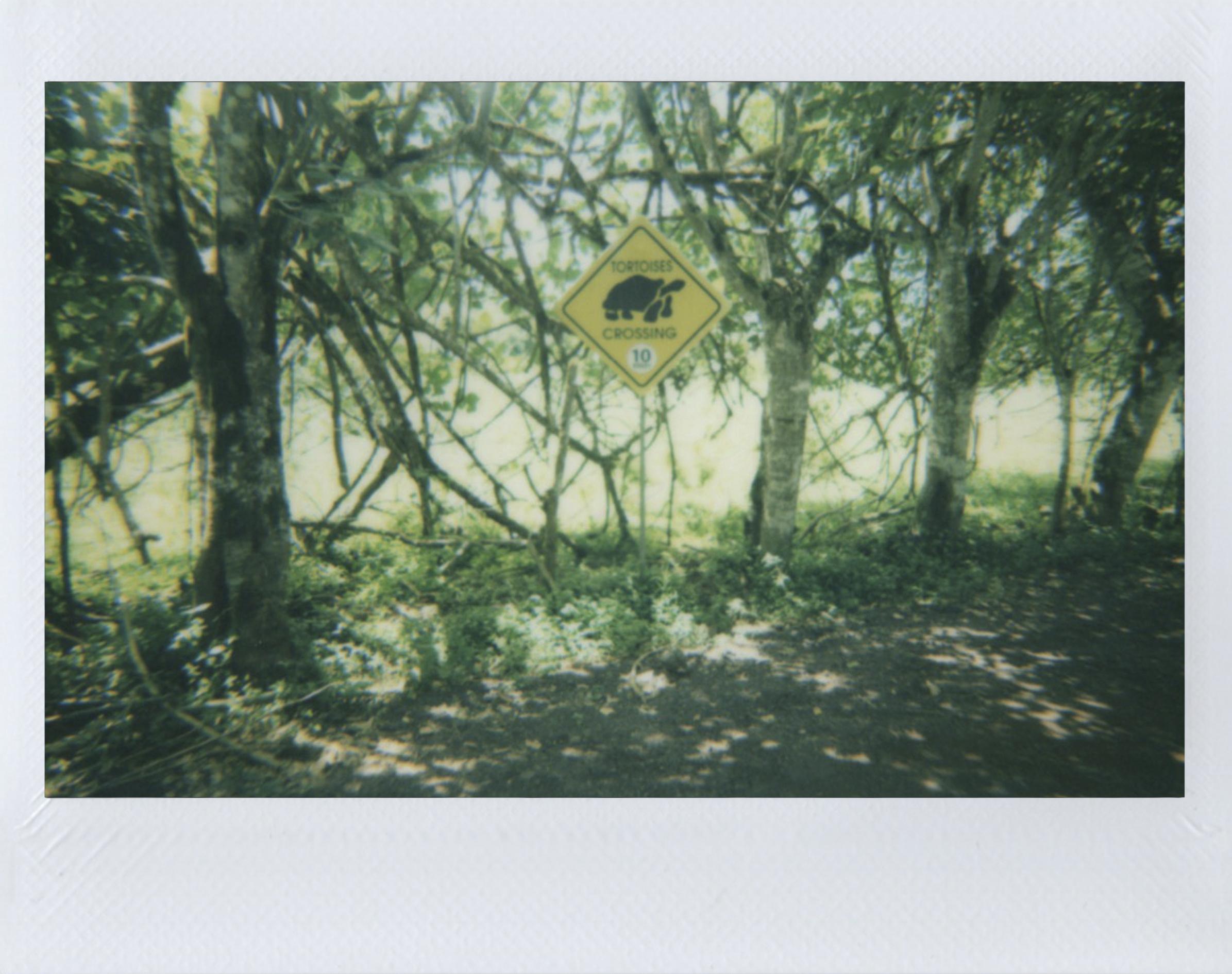 Polaroid 23.jpg
