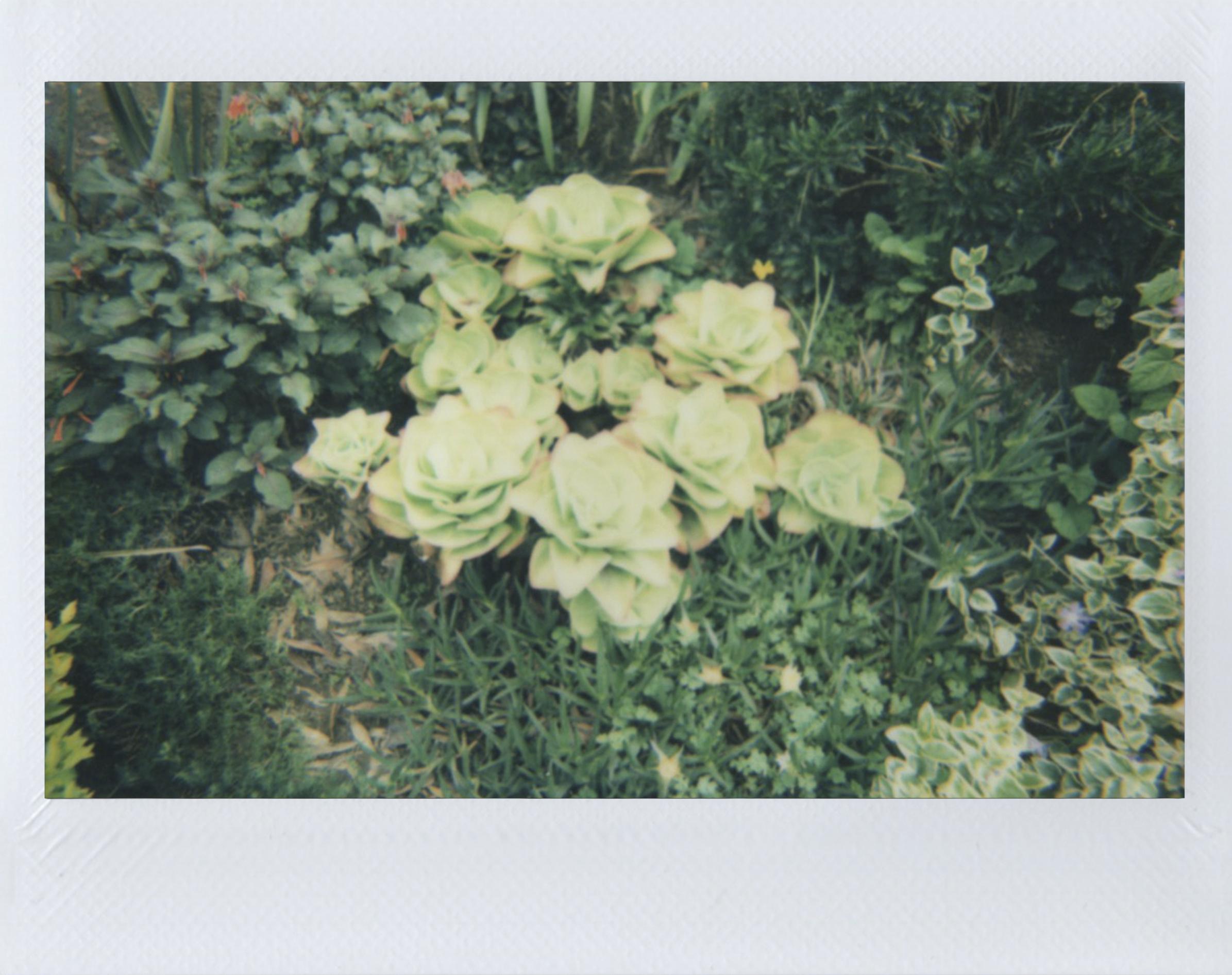 Polaroid 36.jpg