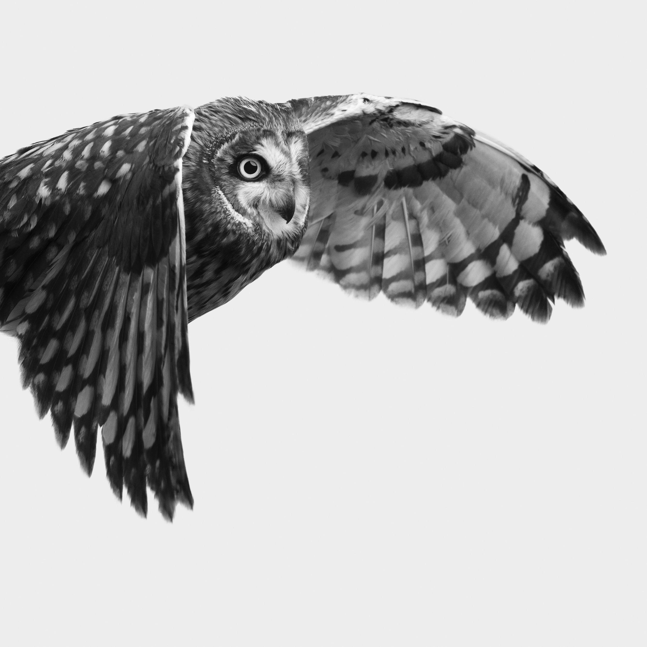 Owl 1 - Print (20x20) - Adjusted.jpg