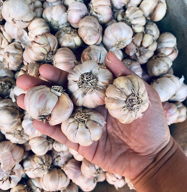 Chub hands, chub garlic.