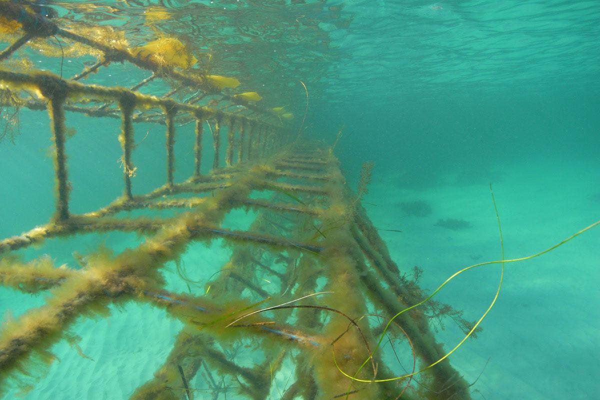 The Aquarius Barrier hinges at low tide