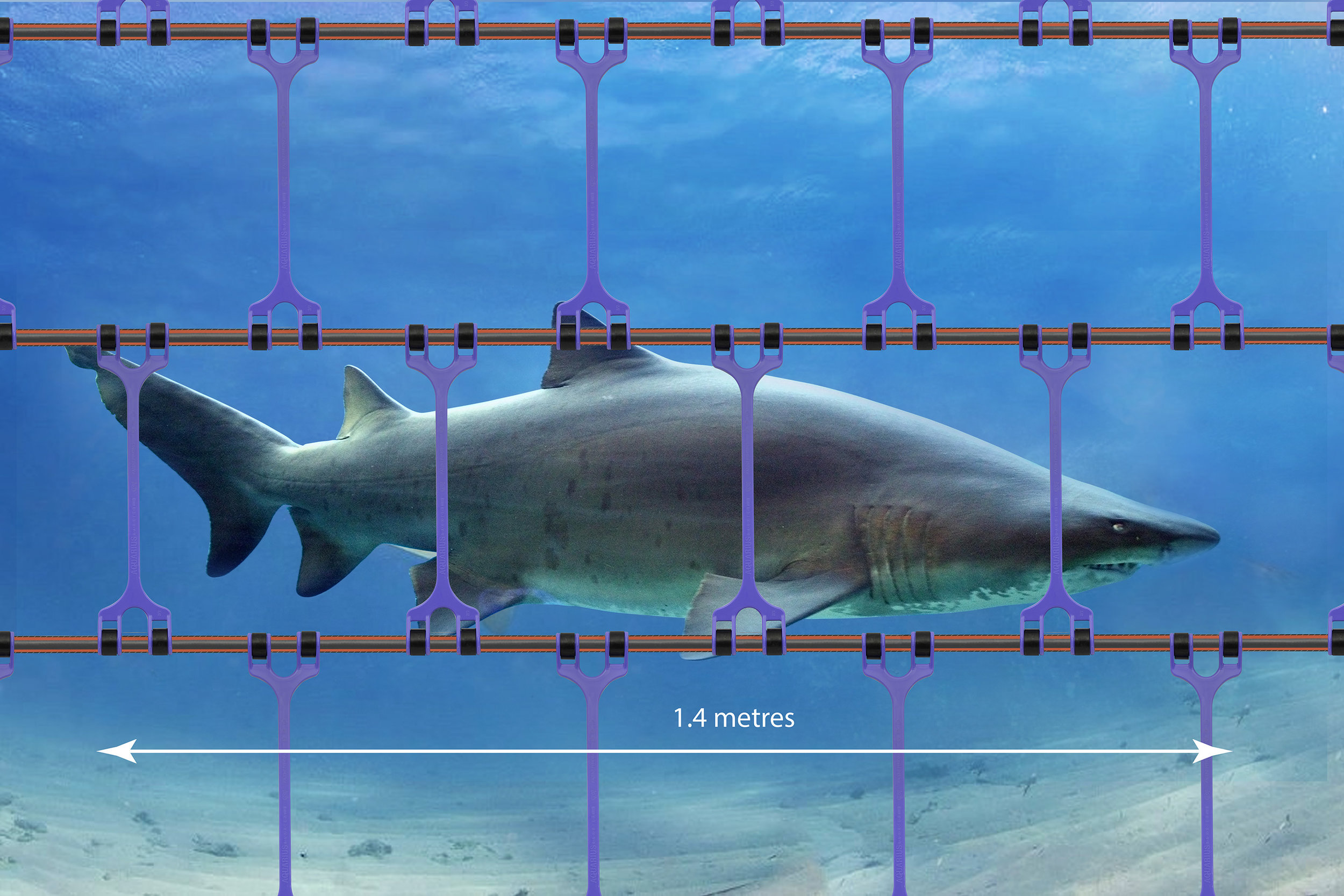 GREY NURSE SHARK BARRIER.jpg