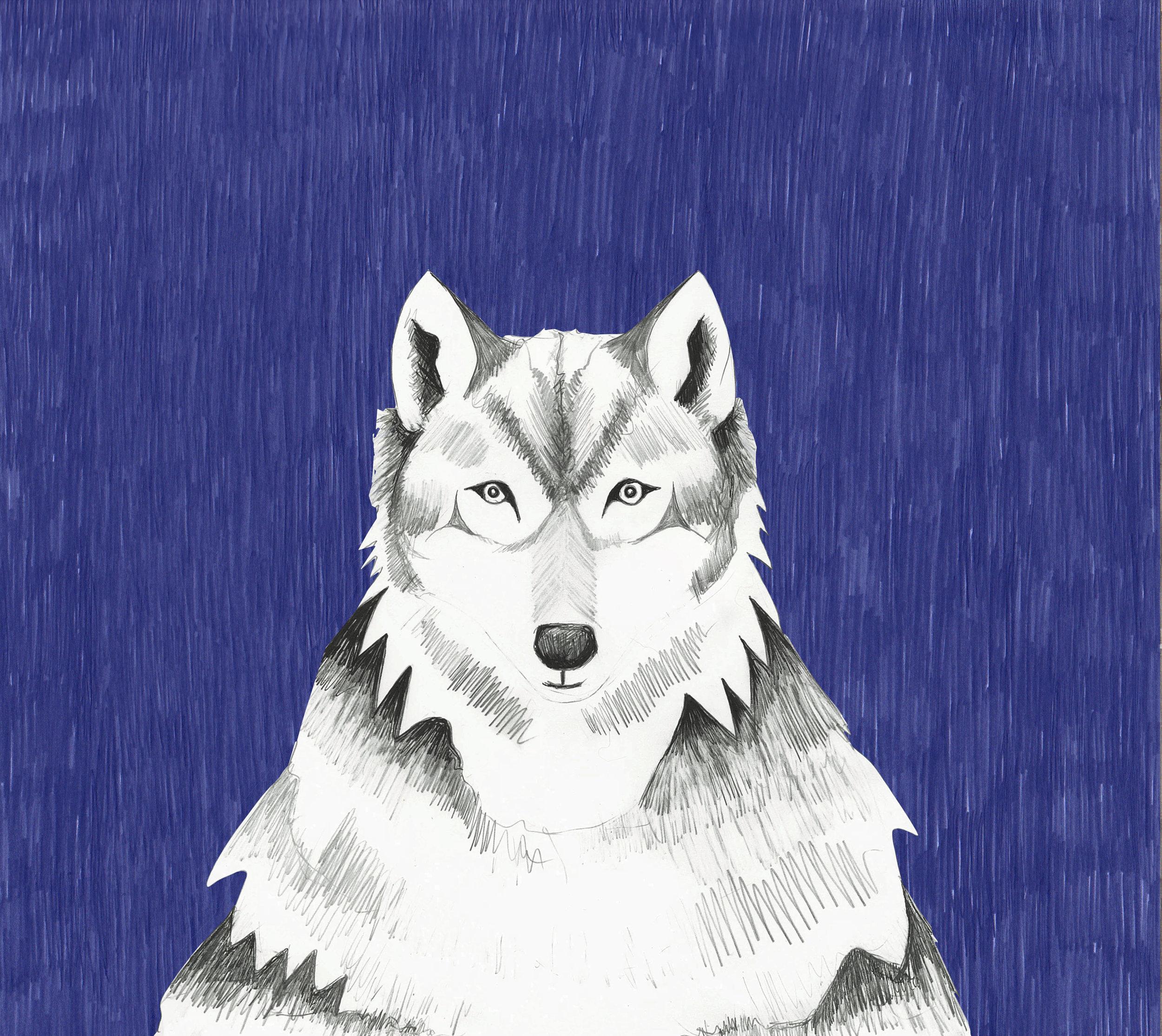 Wolf Blue 2.jpg