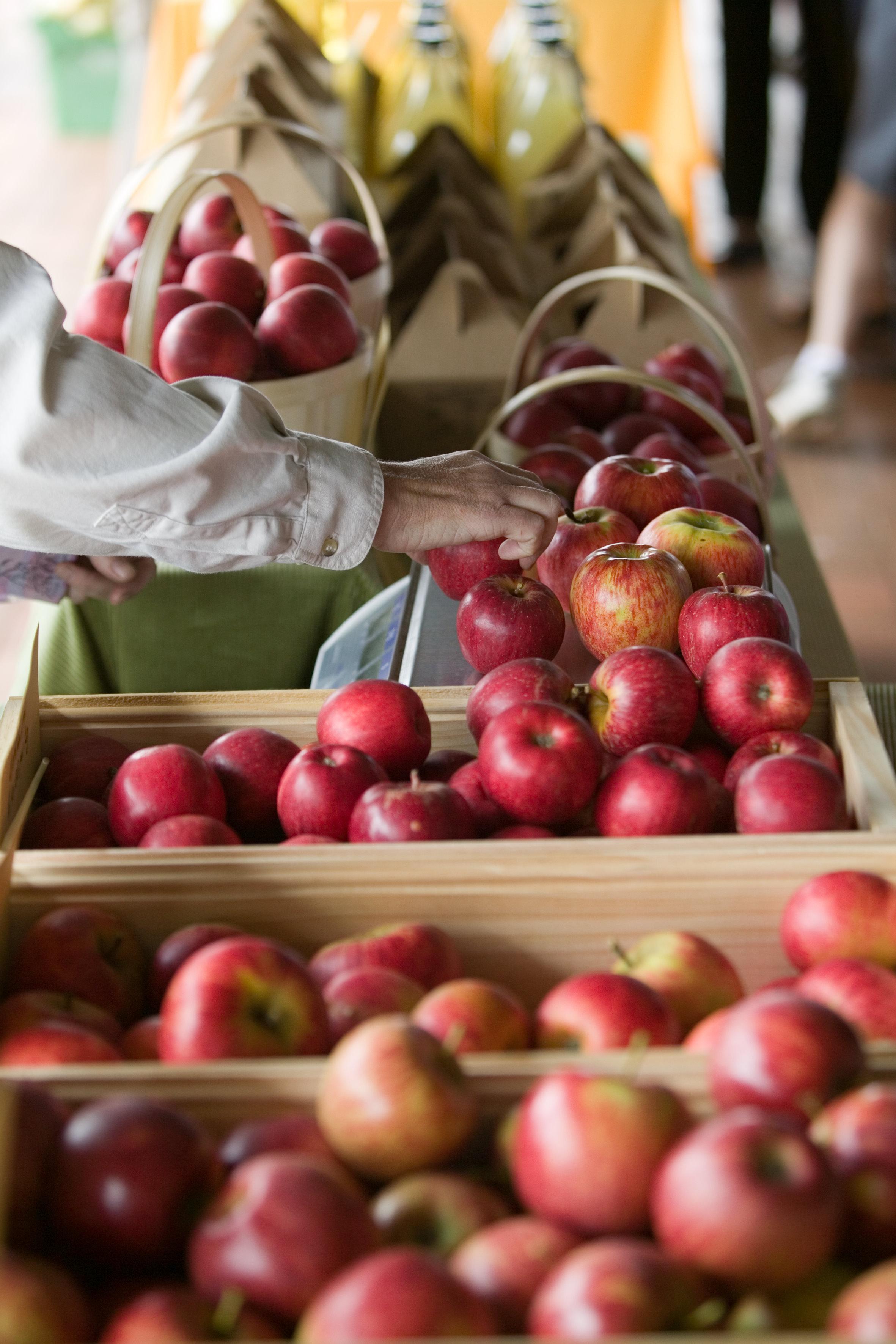 apples at coonawarra.jpg