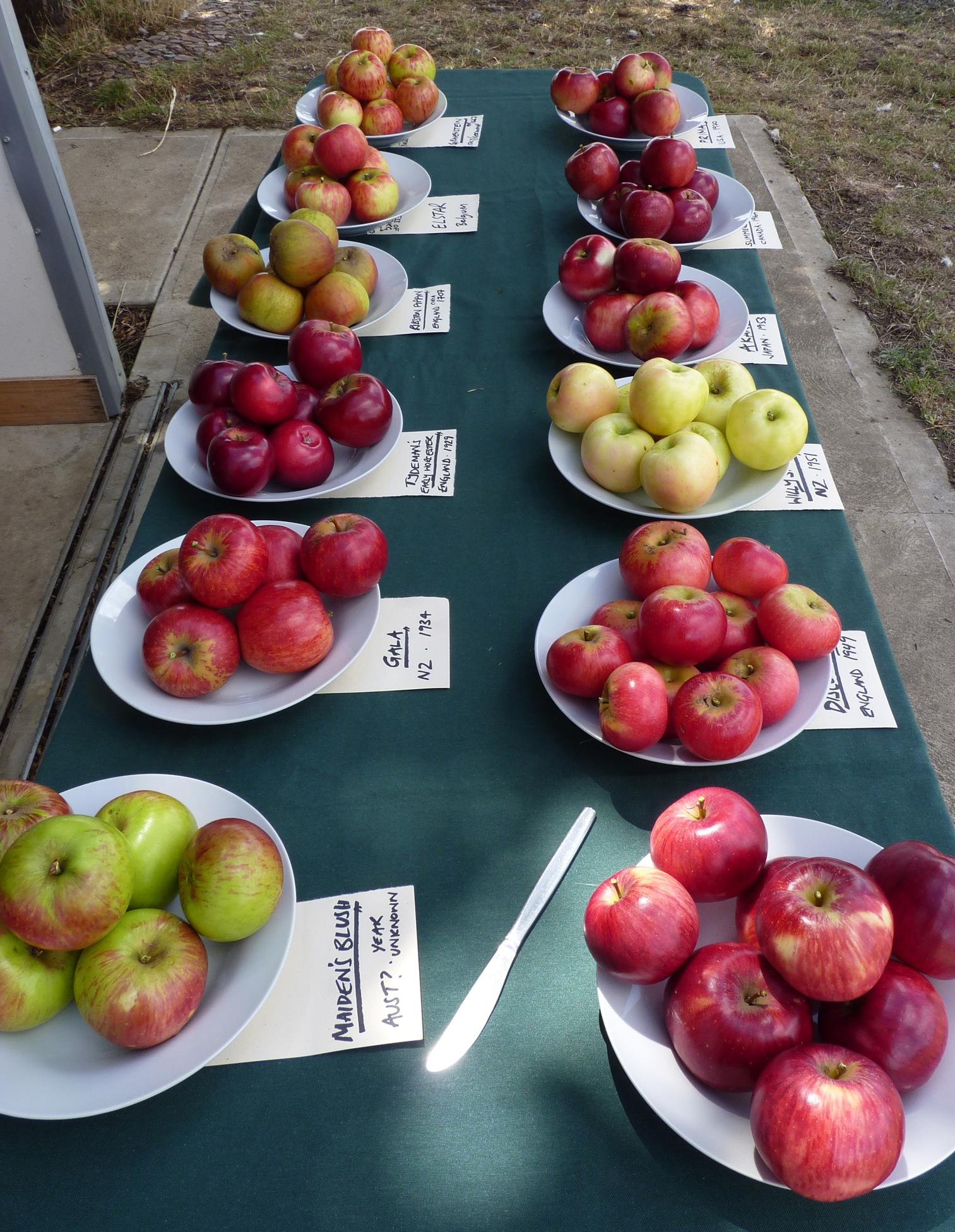 bw 12 varieties.jpg