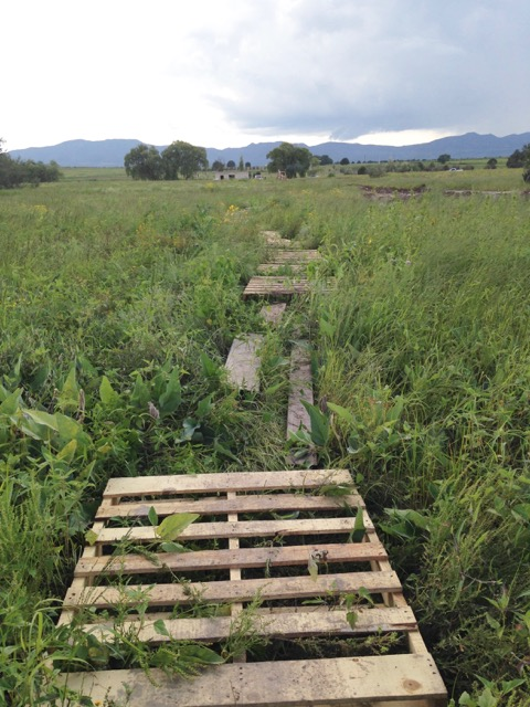 Coca Cola bought pallets and created a new walking path for the children!