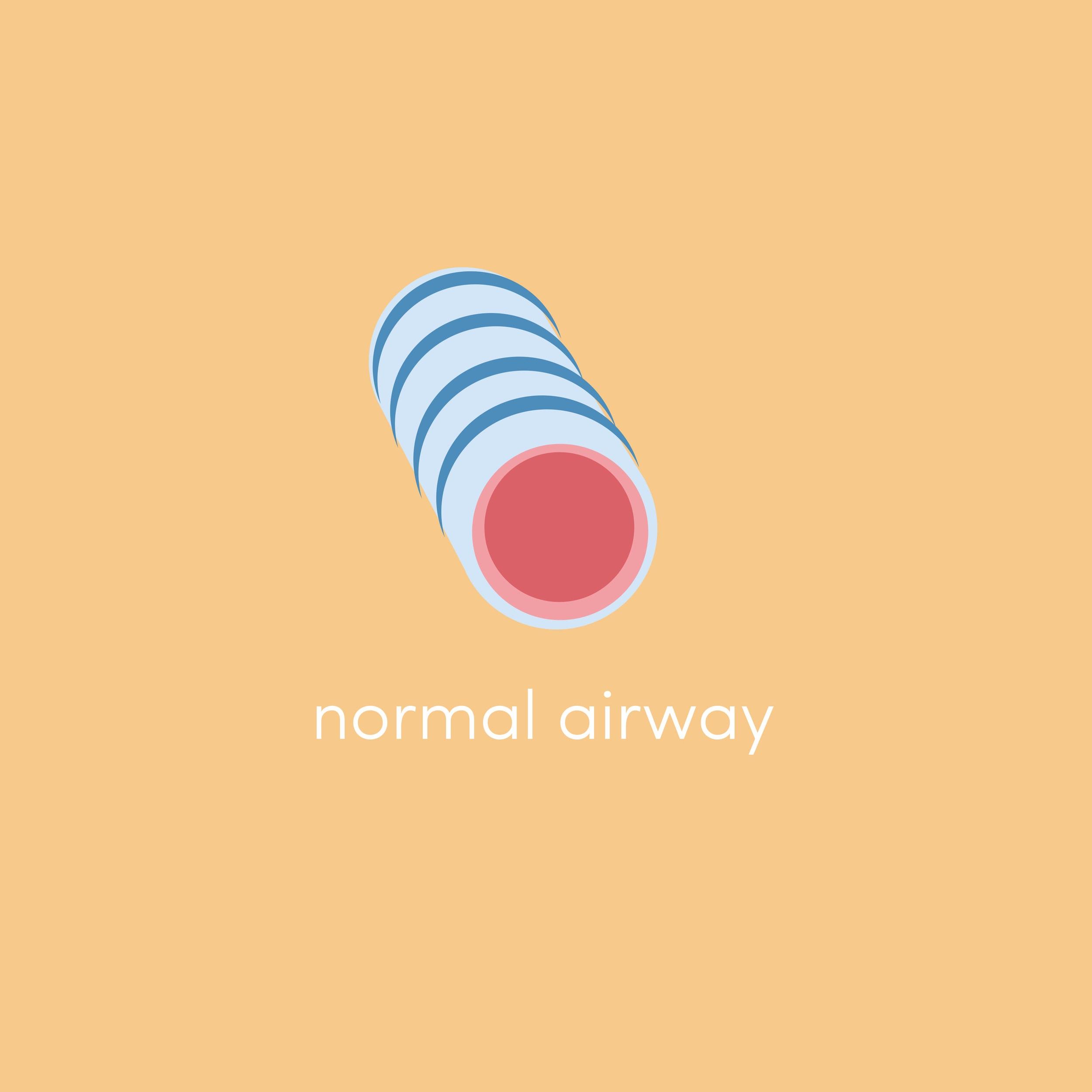normal airways images.jpg