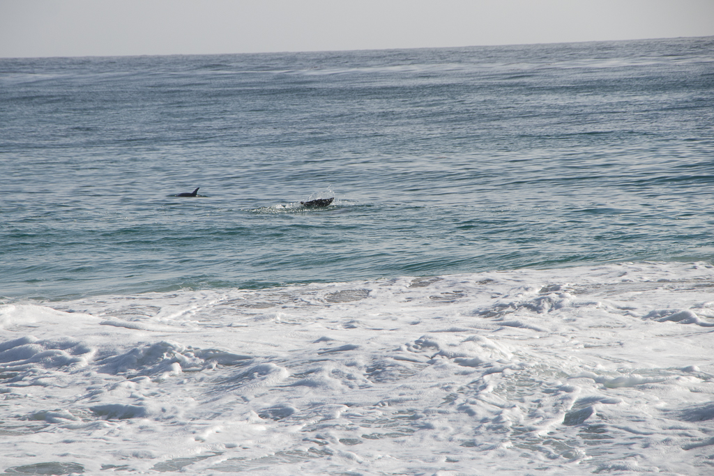 Can't go wrong with dolphins!!!