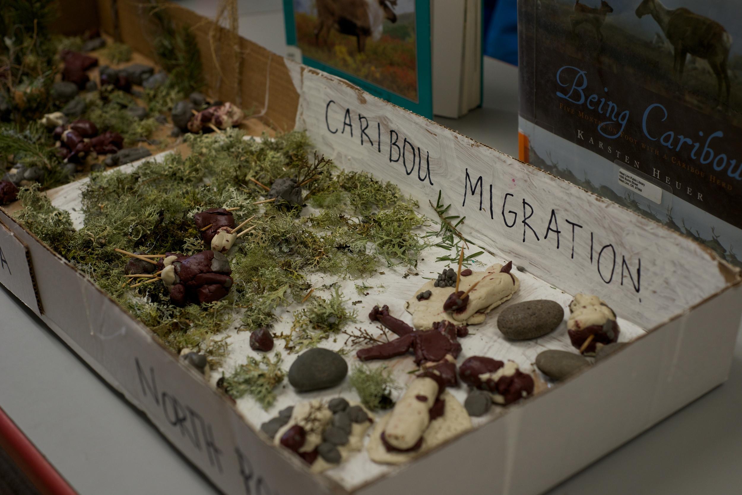 Caribou Migration.jpg