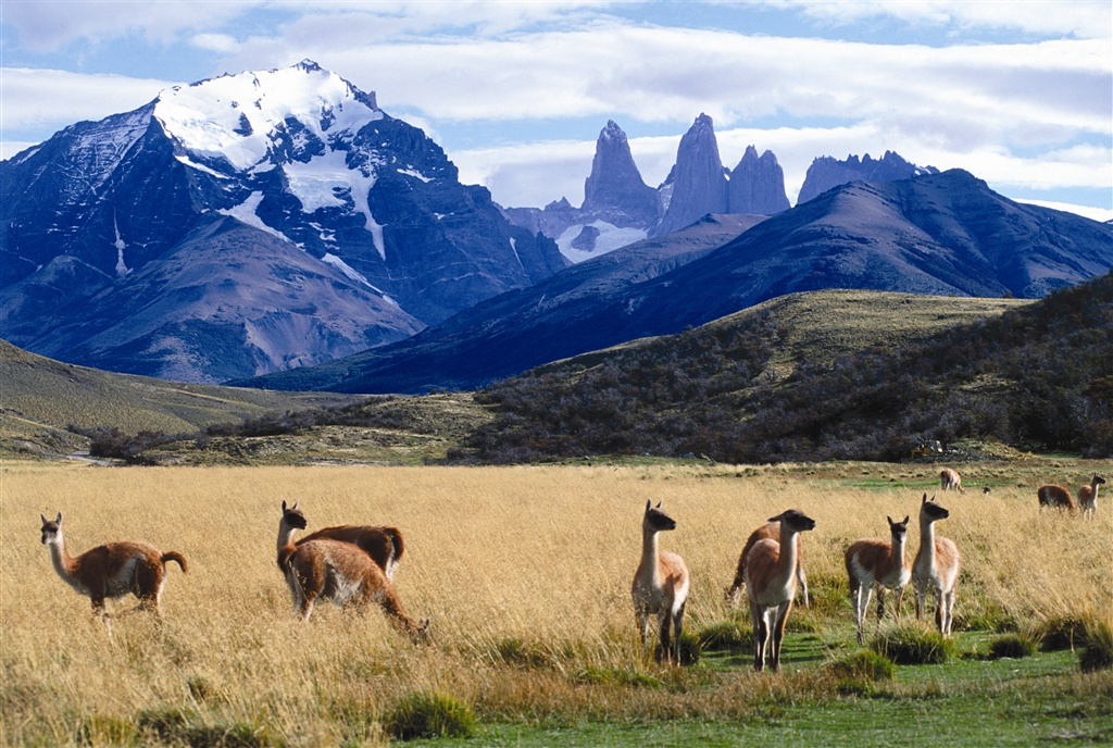 Guanacos in the pampas below the Torres del Paine (photo: Tierra Patagonia)
