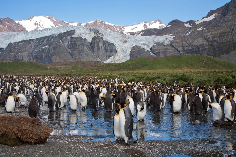 King penguin colony on South Georgia. Photo: Ira Meyer