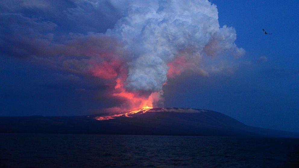 Wolf Volcano erupting. Photo: Diego Paredes