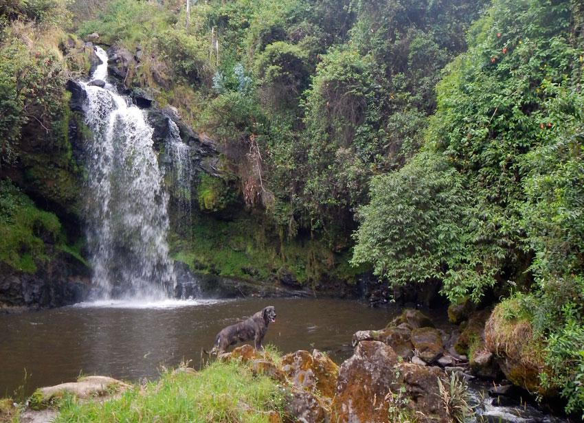 Waterfalls hike accompanied by Fito, the hacienda dog