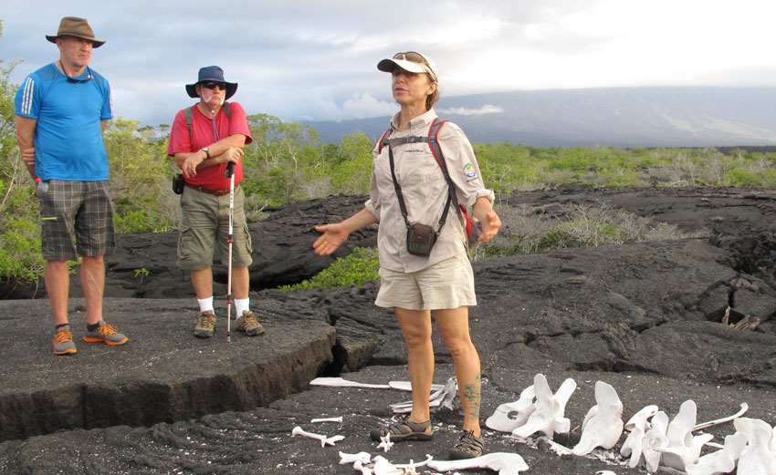 Extensive shore explorations with expert naturalist guides