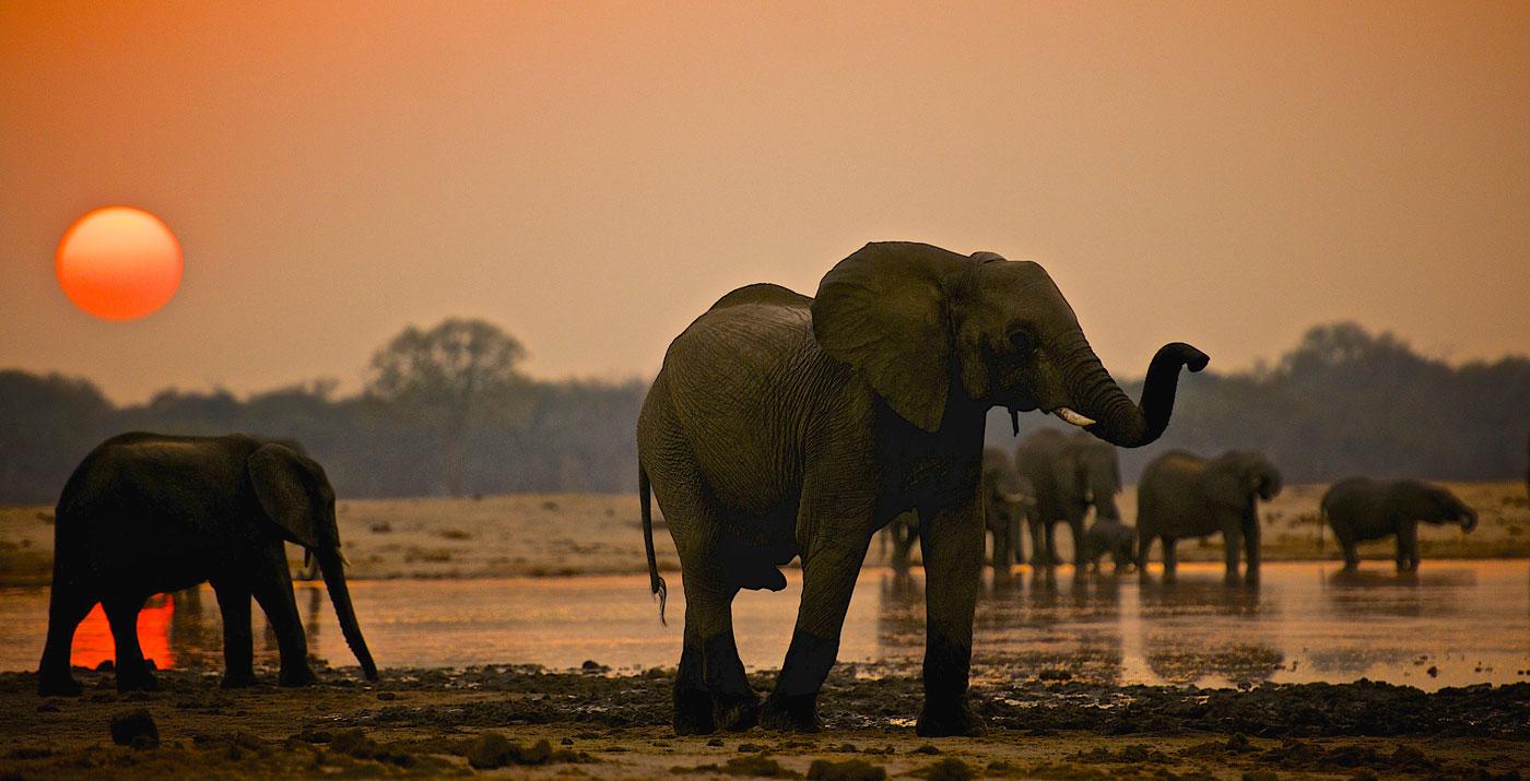 Elephants at sunset in Zimbabwe's Hwange National Park