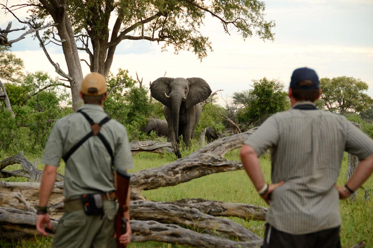 Observing elephants on a bushwalk